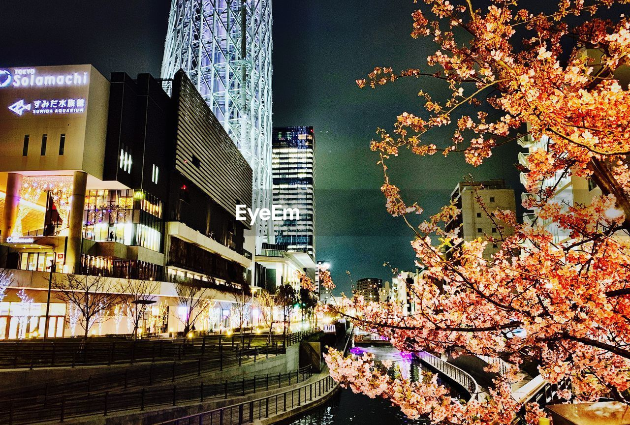 building exterior, architecture, built structure, city, plant, building, tree, nature, flower, flowering plant, growth, blossom, cherry blossom, branch, outdoors, autumn, change, no people, freshness, fragility, springtime, office building exterior, skyscraper, cherry tree, canal