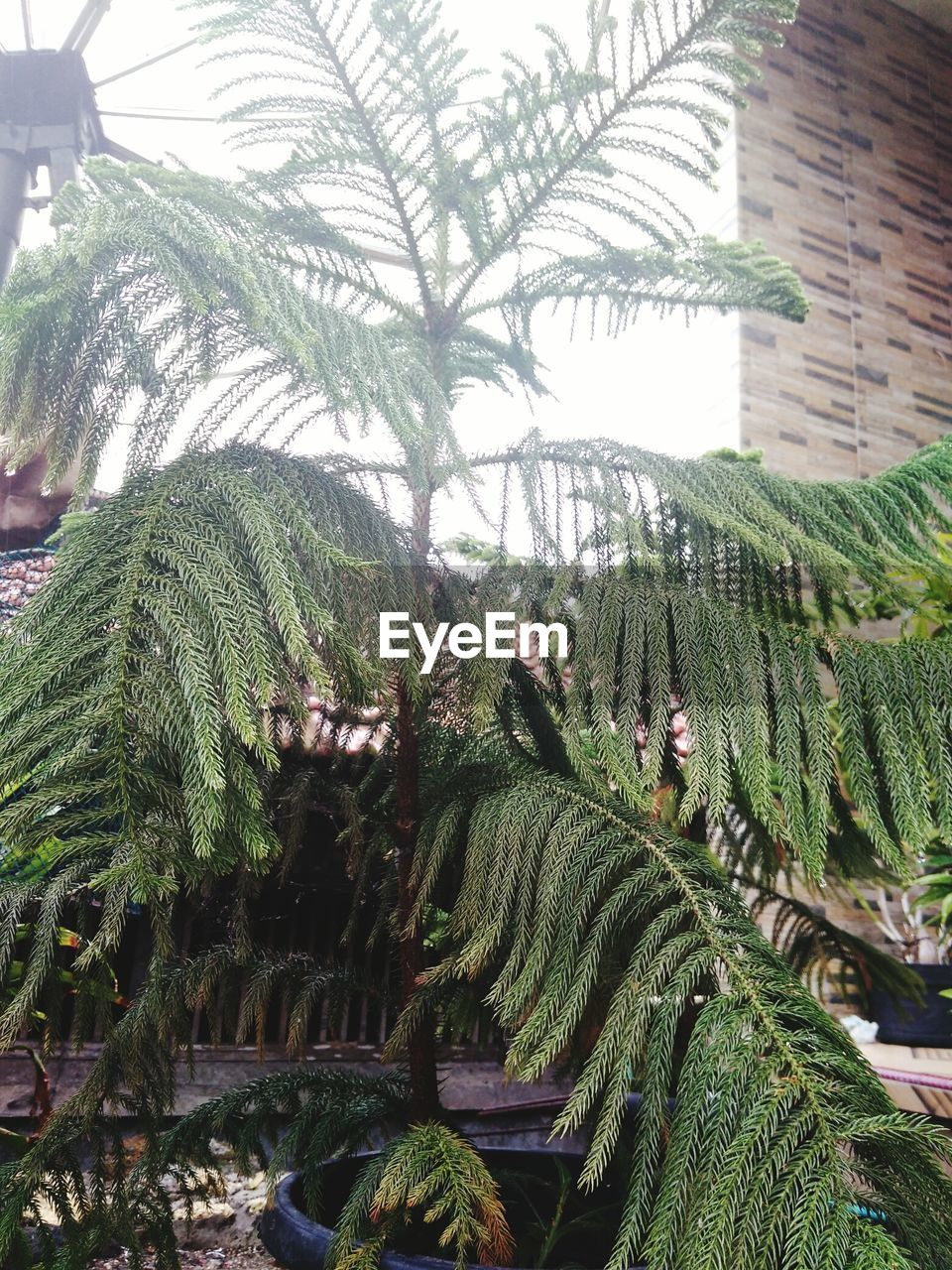 growth, plant, green color, tree, nature, day, tropical climate, building exterior, no people, beauty in nature, palm tree, architecture, outdoors, leaf, built structure, plant part, succulent plant, close-up, cactus, tranquility