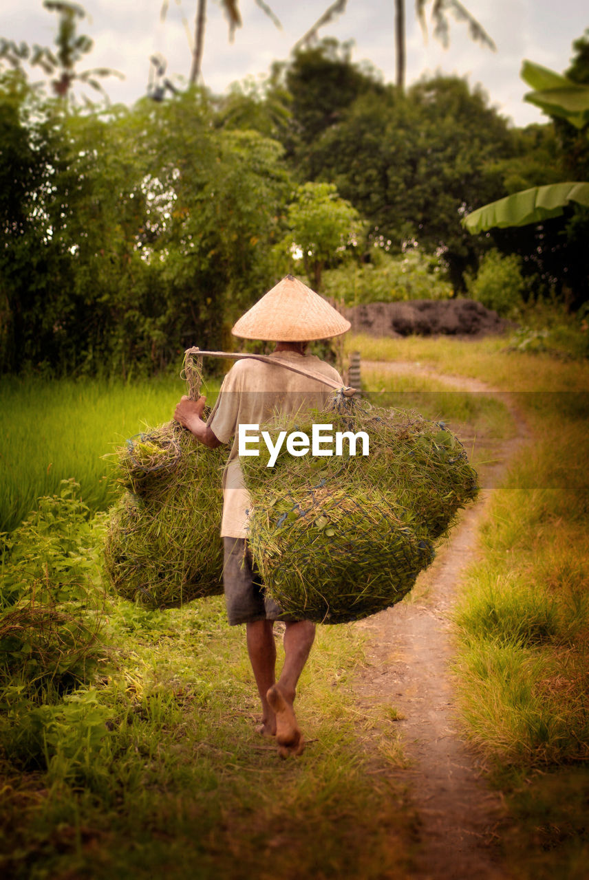 one person, plant, full length, hat, tree, adult, grass, nature, day, carrying, agriculture, holding, real people, walking, growth, farm, farmer, land, green color, outdoors