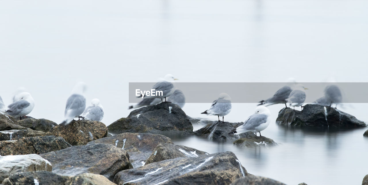 Rocks and birds on beach during winter
