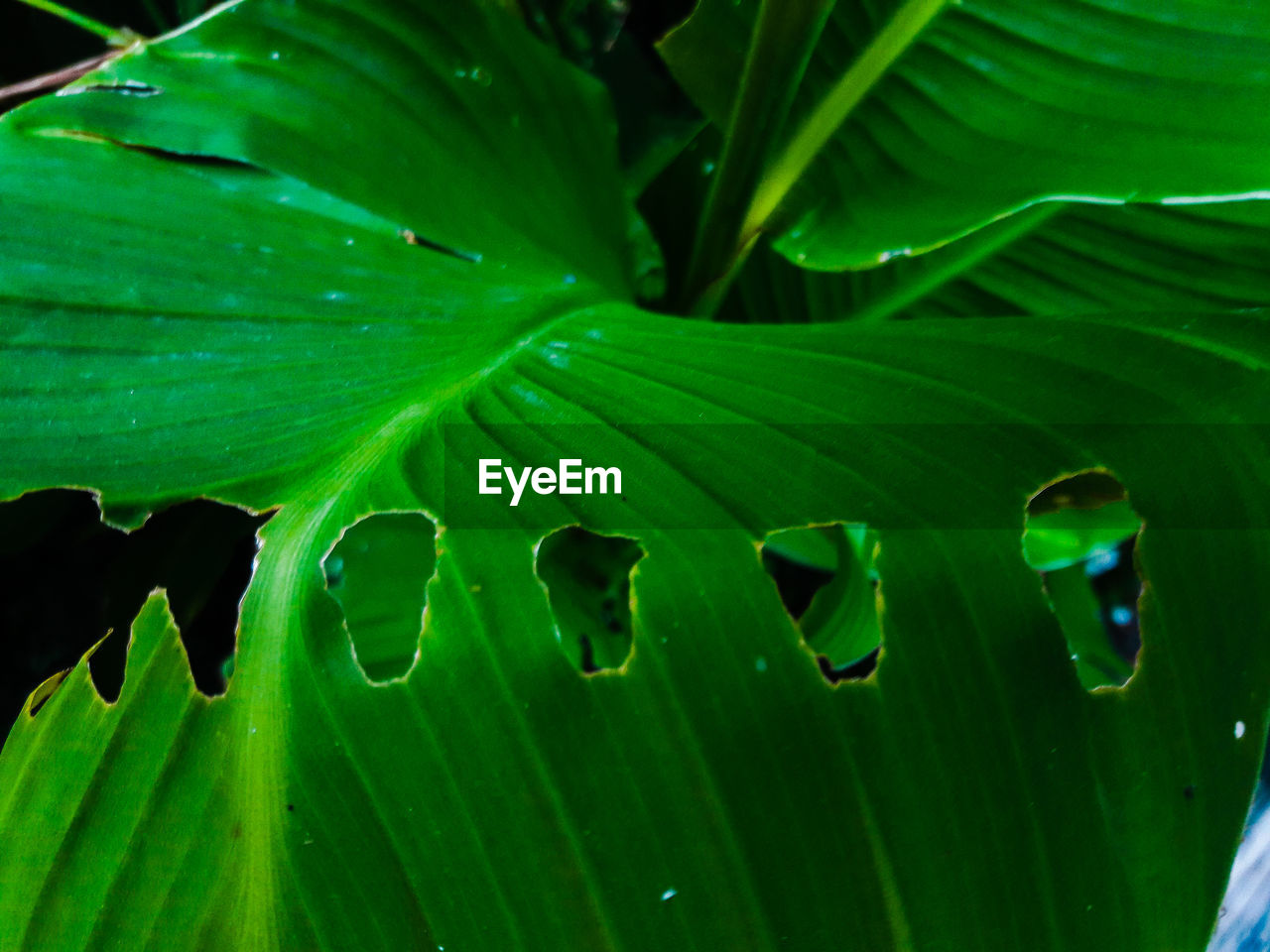 green color, leaf, growth, plant part, close-up, plant, beauty in nature, no people, nature, day, freshness, water, leaves, focus on foreground, drop, full frame, outdoors, green, selective focus, purity, raindrop, dew