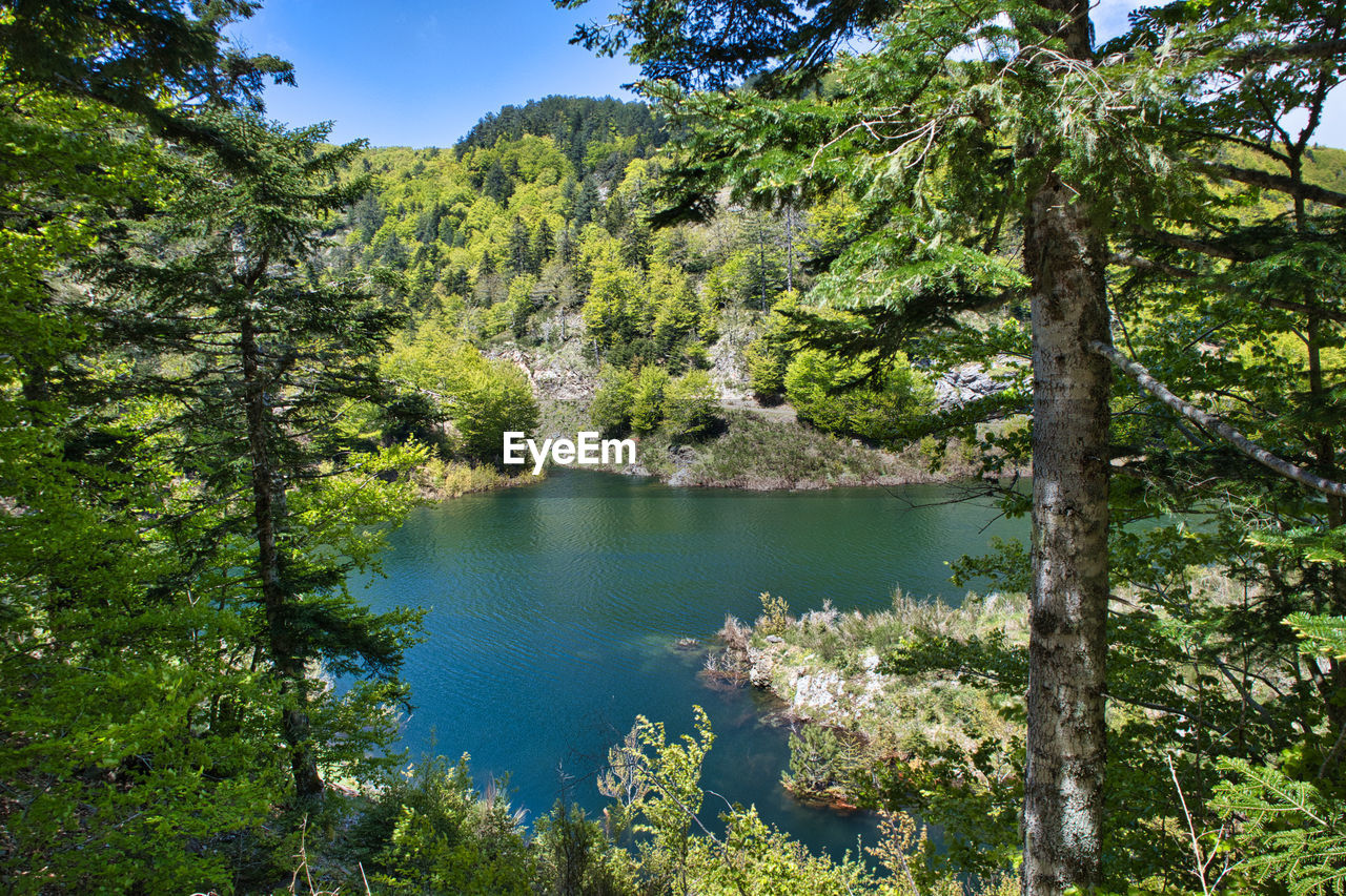 tree, water, plant, beauty in nature, tranquility, scenics - nature, forest, tranquil scene, nature, day, lake, no people, growth, land, green color, non-urban scene, outdoors, sky, woodland