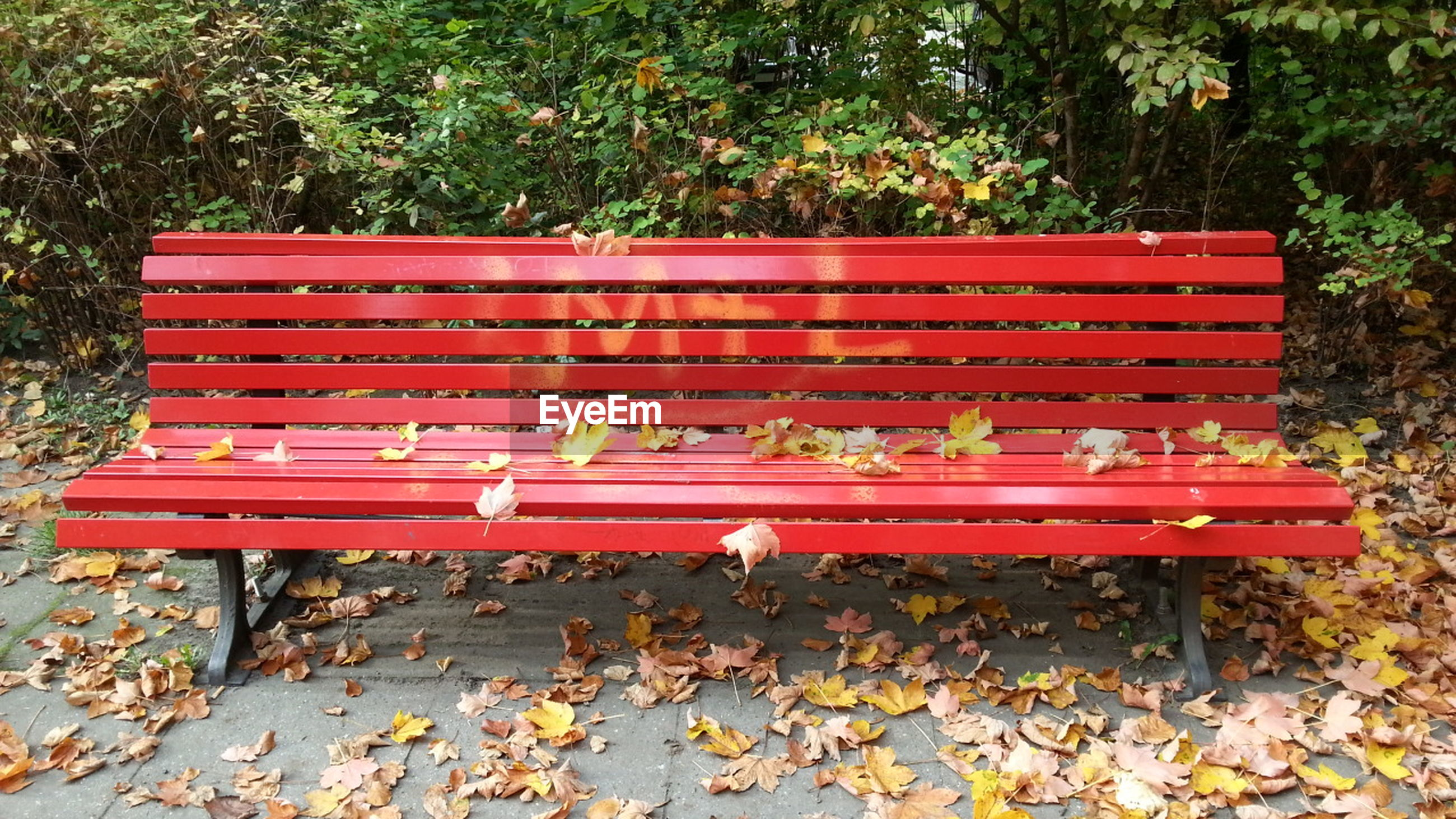 bench, red, tree, relaxation, plant, empty, day, outdoors, absence, leaf, growth, seat, nature, chair, park - man made space, wood - material, tranquility, no people, steps, park