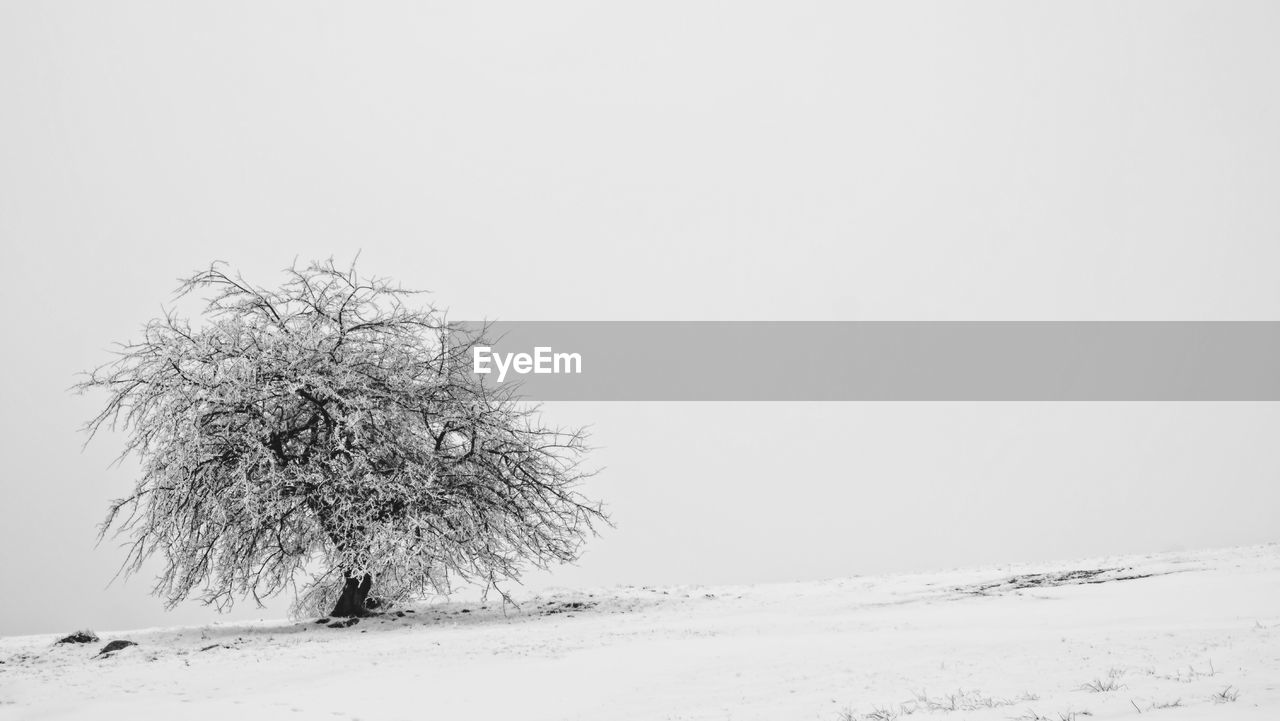 snow, cold temperature, winter, beauty in nature, copy space, tranquility, field, land, tranquil scene, sky, environment, clear sky, tree, nature, scenics - nature, landscape, plant, no people, day, outdoors, extreme weather, blizzard, snowing