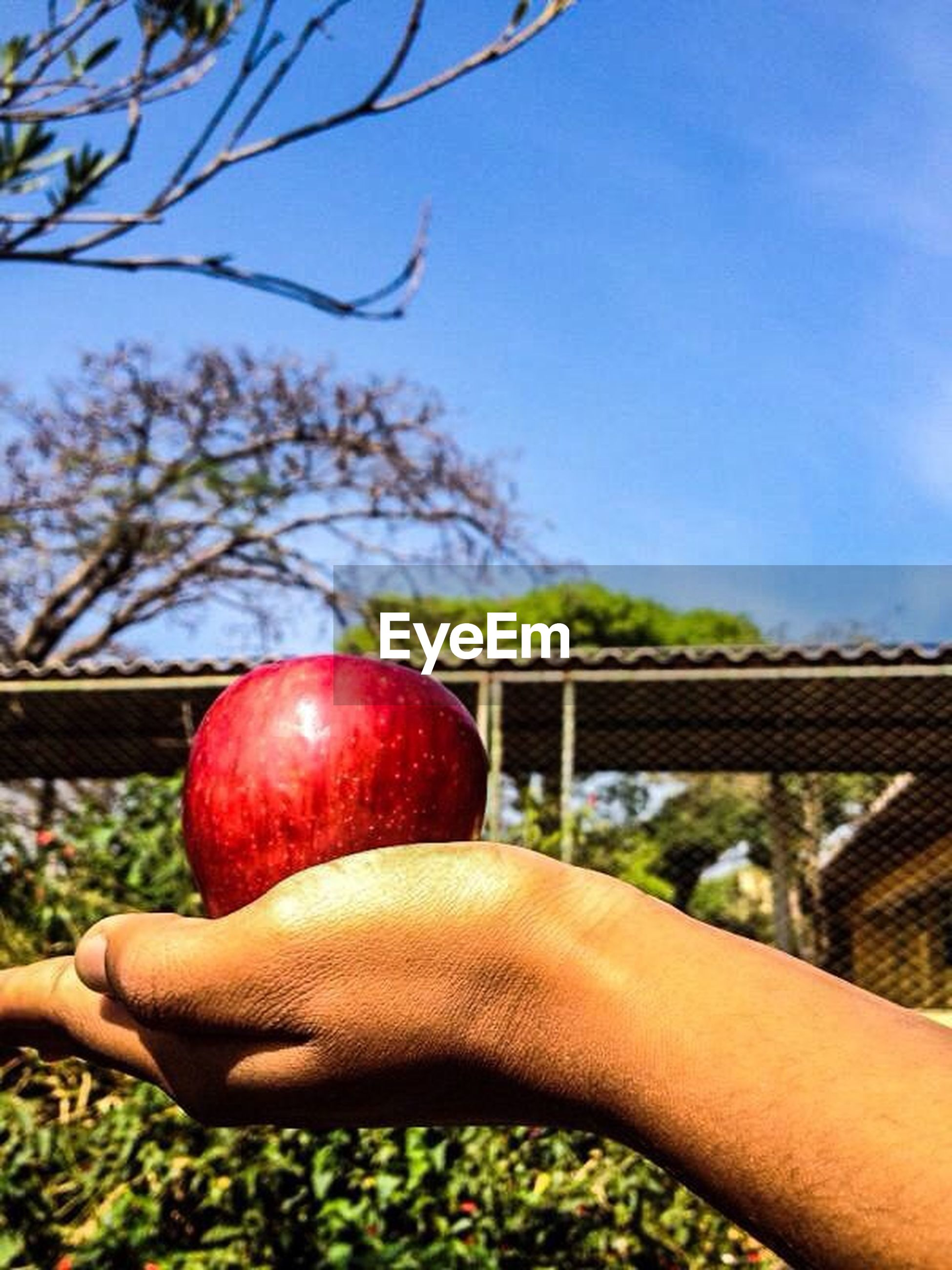 person, holding, tree, food and drink, personal perspective, part of, fruit, cropped, focus on foreground, food, sky, lifestyles, freshness, leisure activity, human finger, unrecognizable person, close-up