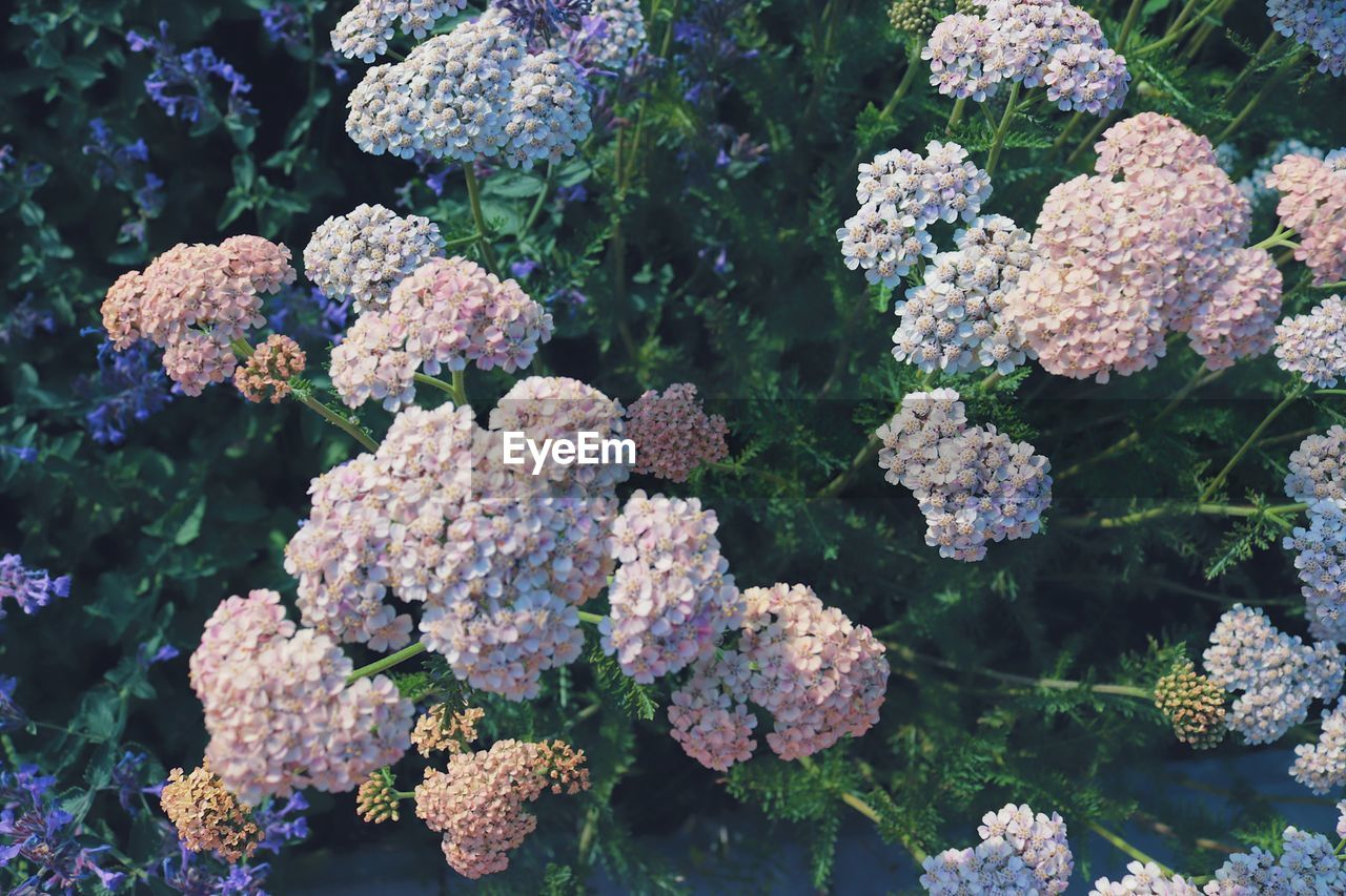 growth, beauty in nature, flower, fragility, no people, vulnerability, flowering plant, plant, freshness, day, nature, close-up, leaf, high angle view, plant part, green color, outdoors, focus on foreground, flower head, selective focus, lantana