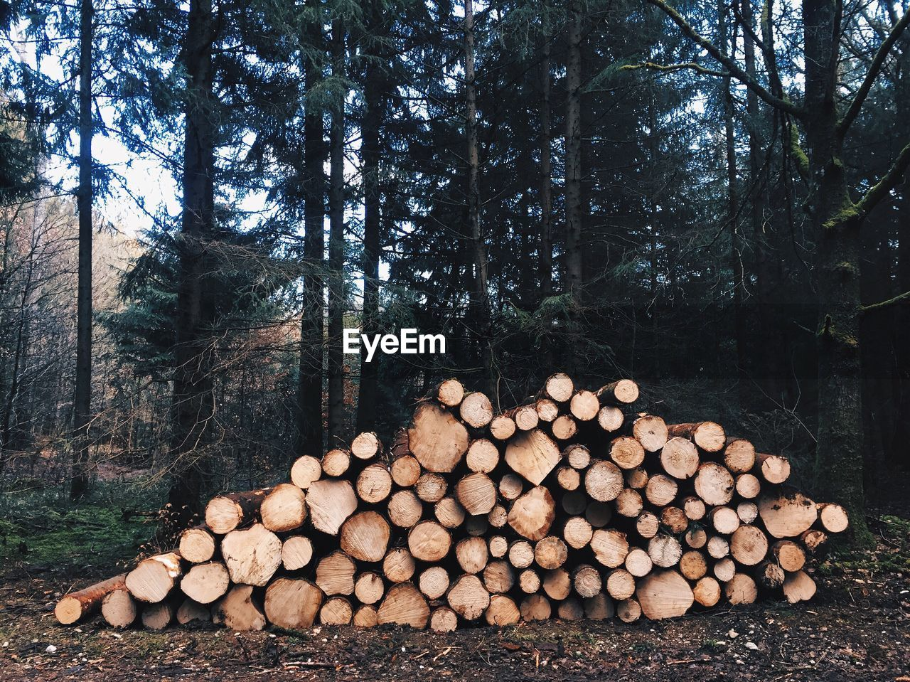 Stack of logs against trees at forest