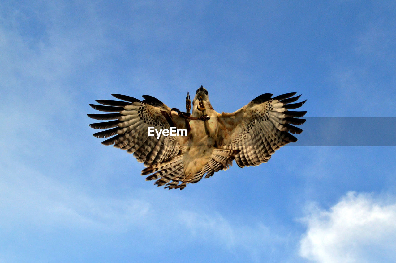 Directly Below Shot Of Eagle Flying In Sky