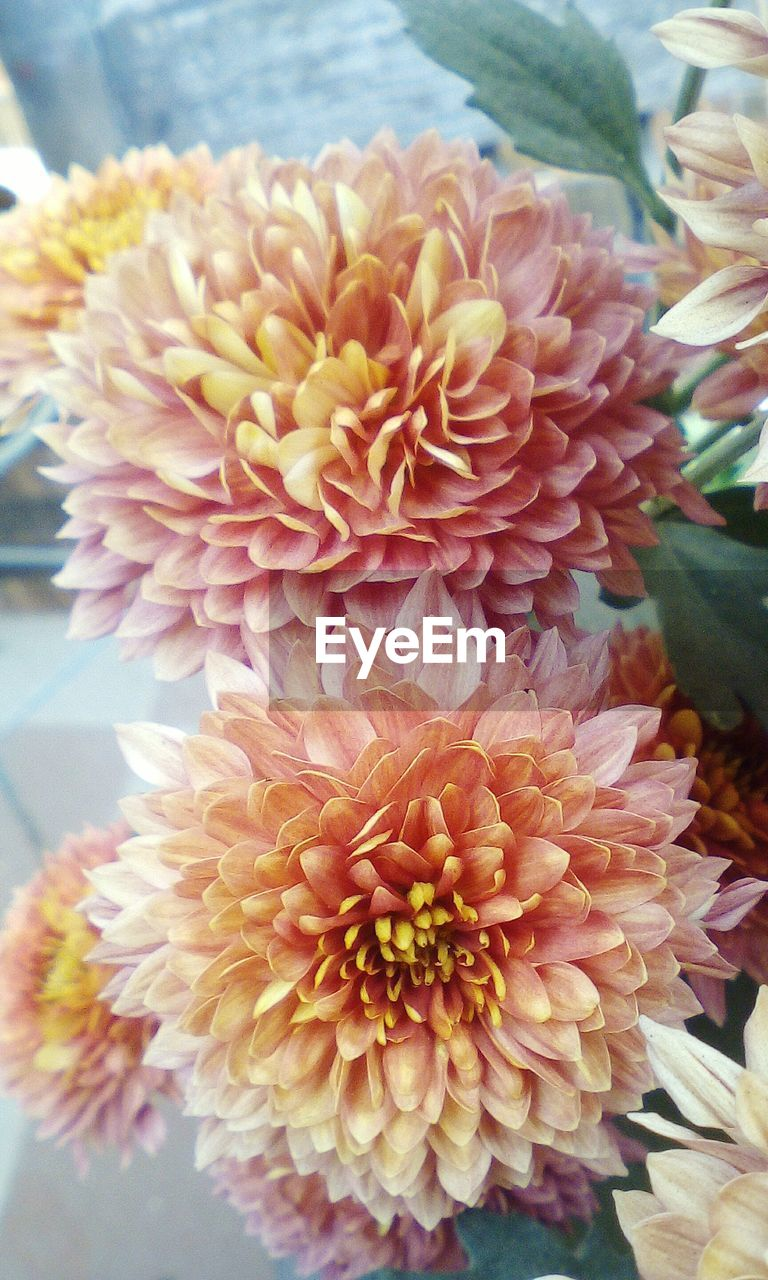 flower, beauty in nature, petal, nature, fragility, flower head, freshness, close-up, no people, plant, growth, blooming, dahlia, day, outdoors