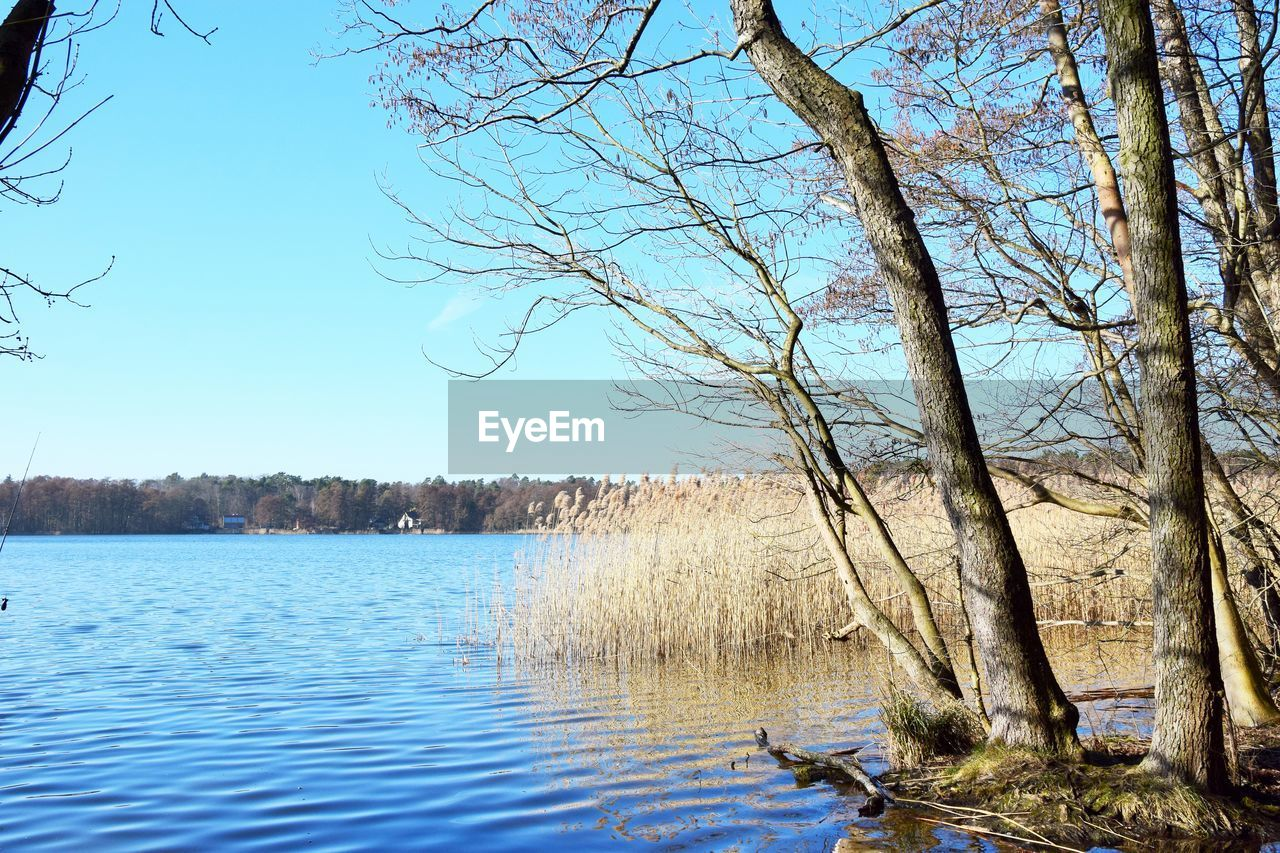 tree, water, plant, sky, tranquility, scenics - nature, beauty in nature, lake, tranquil scene, nature, bare tree, no people, clear sky, day, branch, non-urban scene, forest, land, growth, outdoors