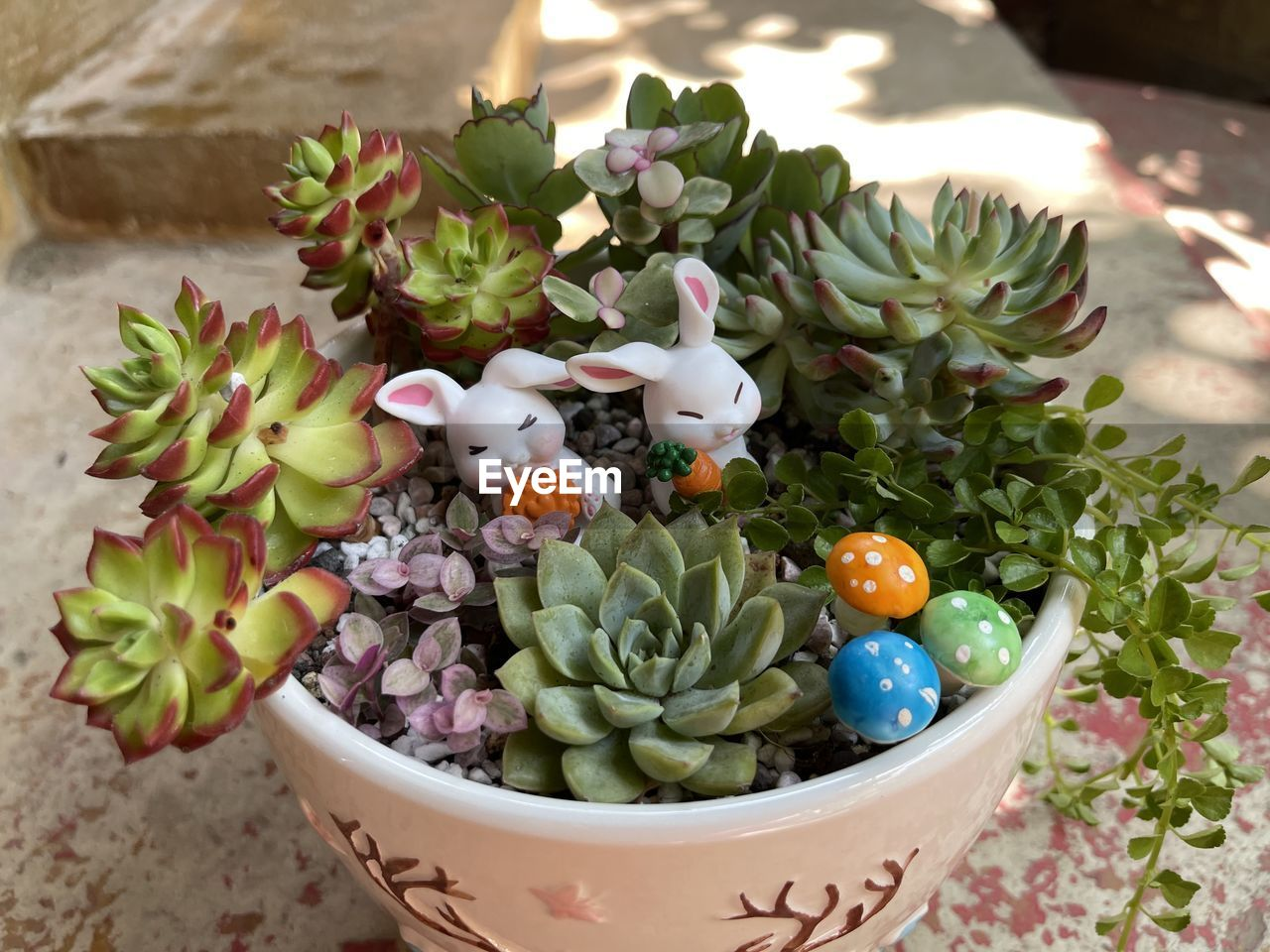 HIGH ANGLE VIEW OF MULTI COLORED FLOWERS IN POT