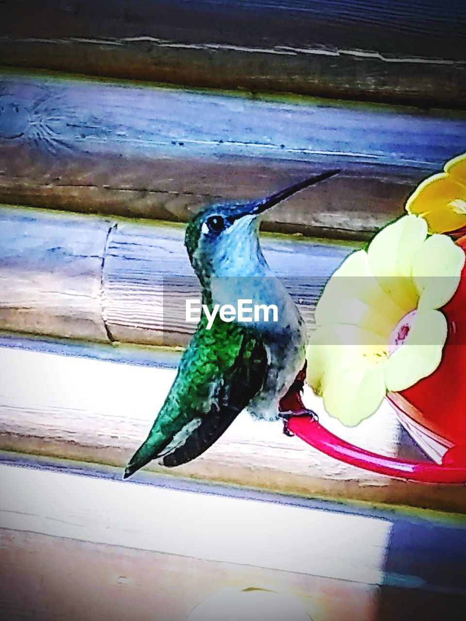 animal, animal themes, vertebrate, one animal, bird, flower, animal wildlife, animals in the wild, plant, no people, flowering plant, beauty in nature, close-up, perching, day, nature, outdoors, wood - material, freshness, parrot