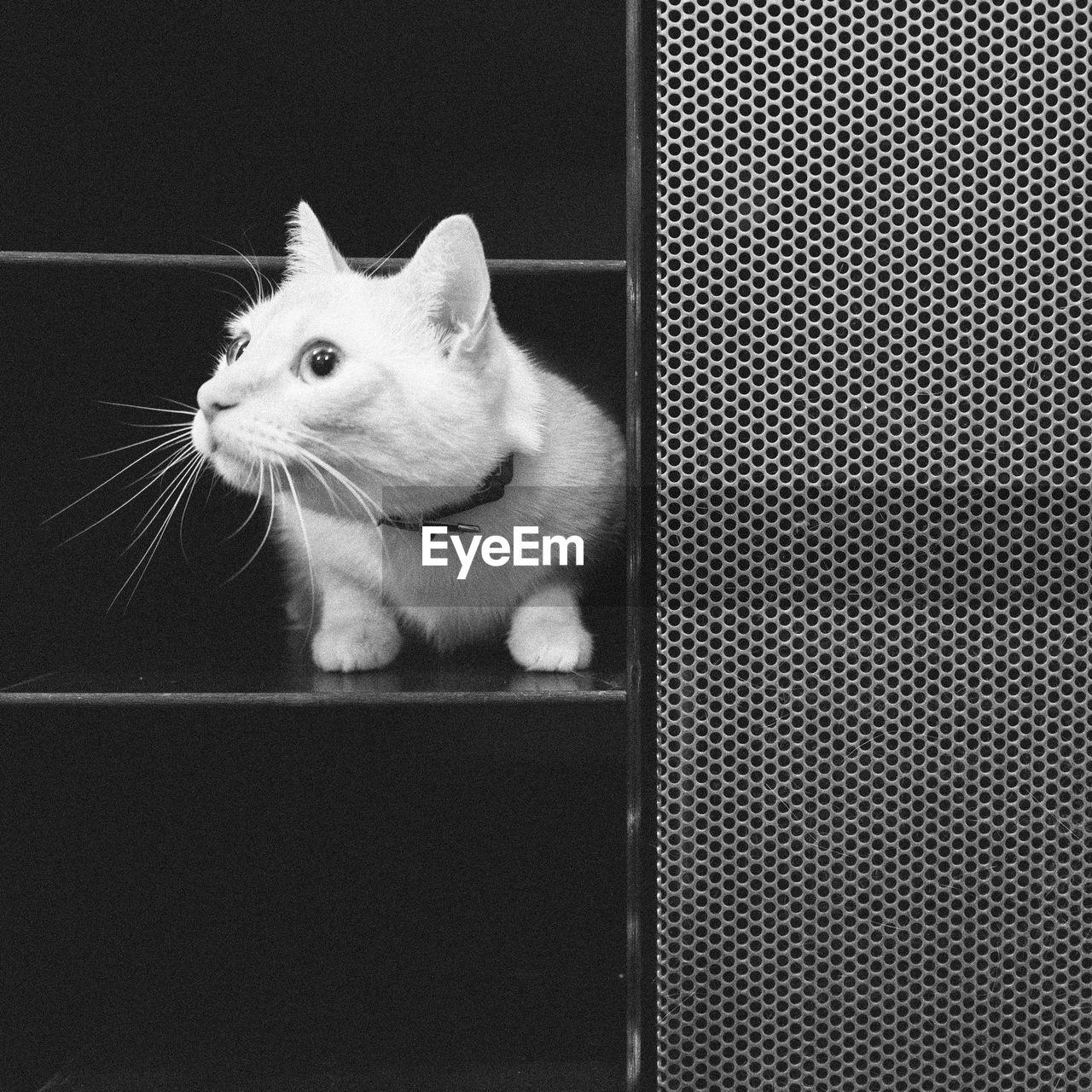 Scared white cat hiding in shelf