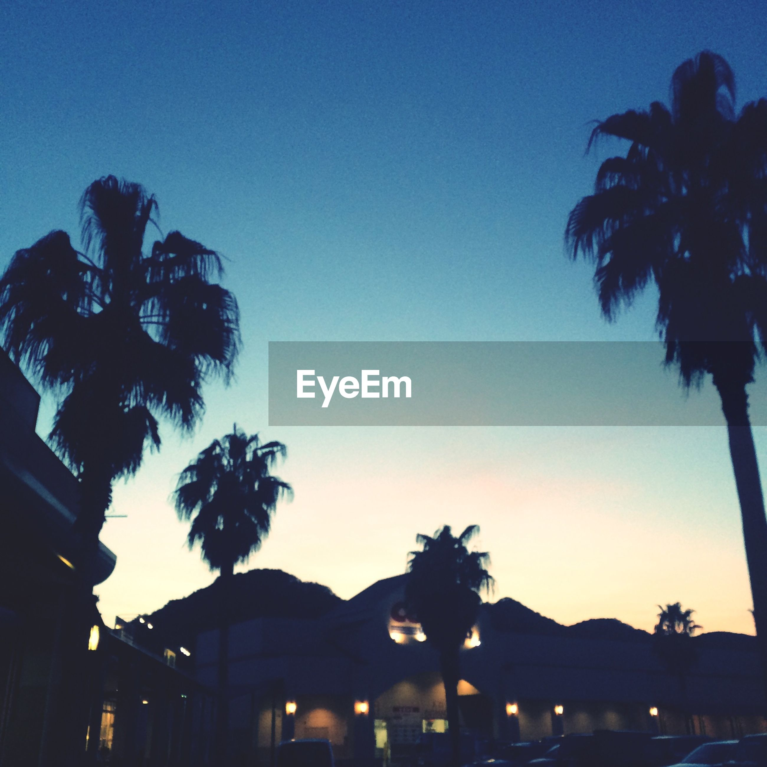 palm tree, silhouette, tree, low angle view, clear sky, copy space, built structure, building exterior, architecture, dusk, sky, sunset, blue, growth, illuminated, nature, outdoors, no people, street light, night