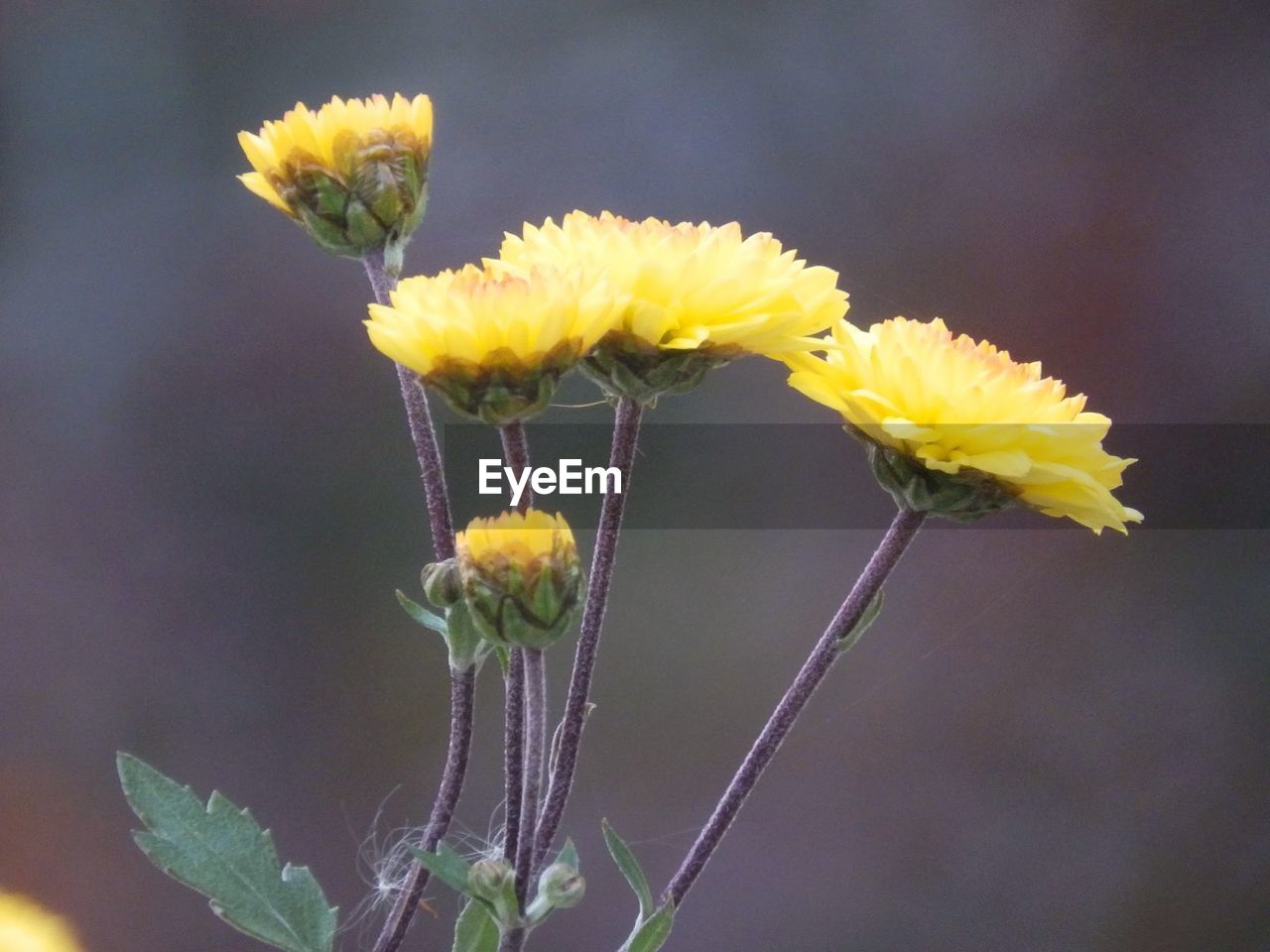 flower, fragility, beauty in nature, yellow, nature, plant, growth, close-up, petal, freshness, no people, flower head, outdoors, day, blooming