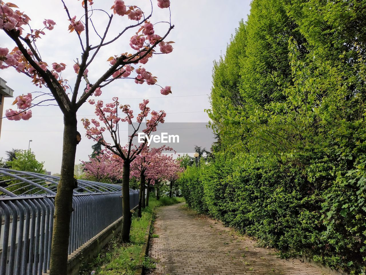 plant, tree, growth, nature, sky, beauty in nature, the way forward, no people, footpath, direction, flower, day, flowering plant, tranquility, green color, outdoors, tranquil scene, blossom, freshness, transportation, springtime, cherry blossom