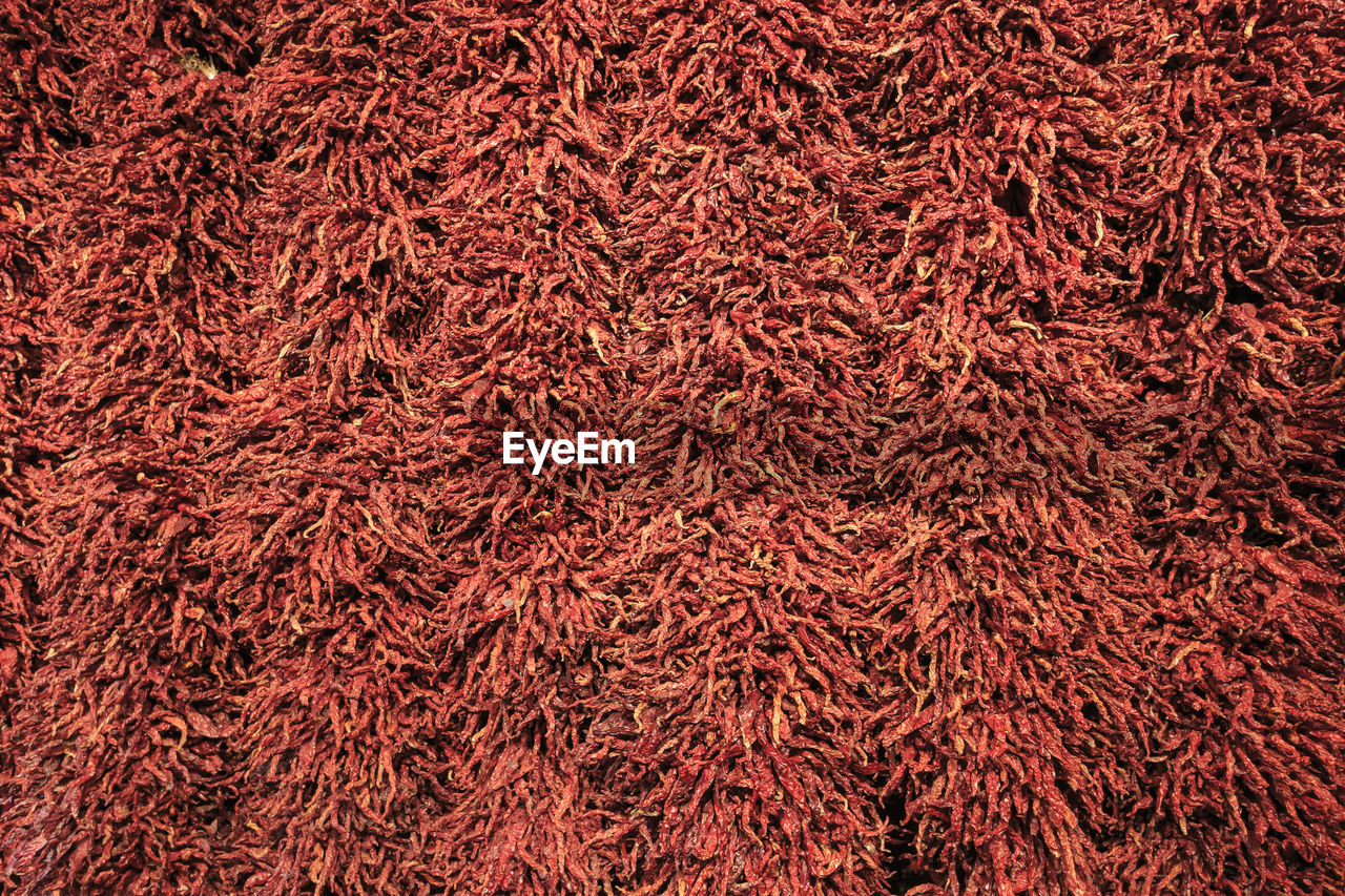backgrounds, full frame, red, no people, close-up, pattern, abundance, textured, day, nature, outdoors, large group of objects, plant, wool, dry, brown, beauty in nature, still life, tree, textile
