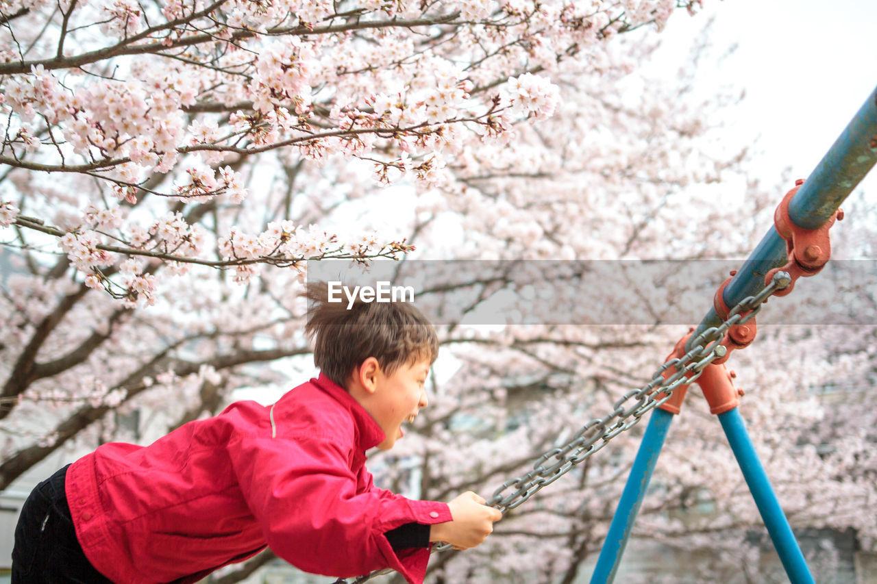 Boy Swinging Against Cherry Tree