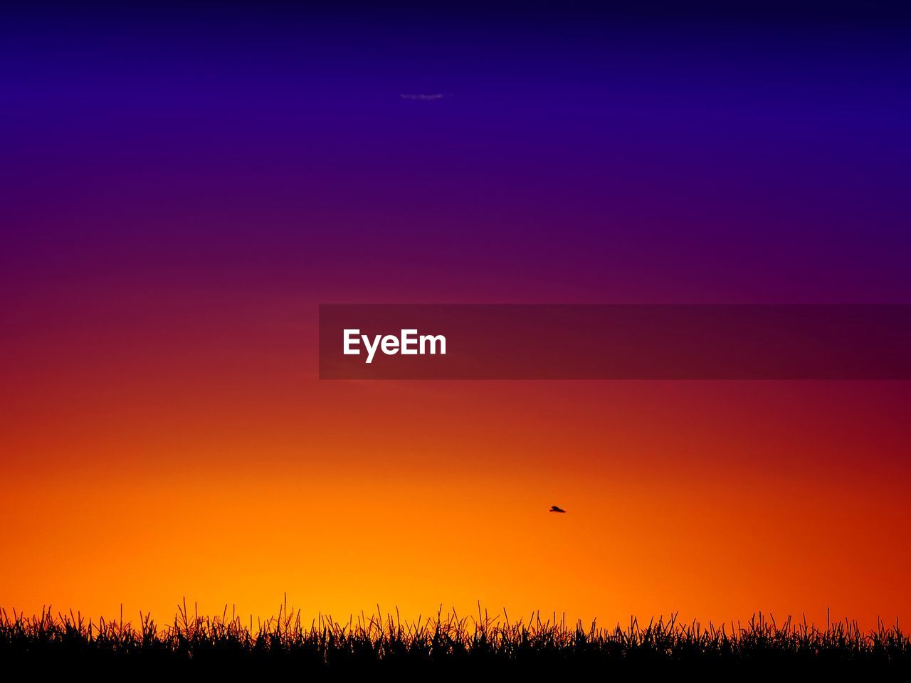 sunset, nature, beauty in nature, scenics, flying, tranquil scene, silhouette, orange color, outdoors, tranquility, bird, landscape, field, sky, animals in the wild, growth, animal wildlife, animal themes, one animal, no people, tree, rural scene, parachute, hot air balloon, clear sky, grass, paragliding, day, bird of prey
