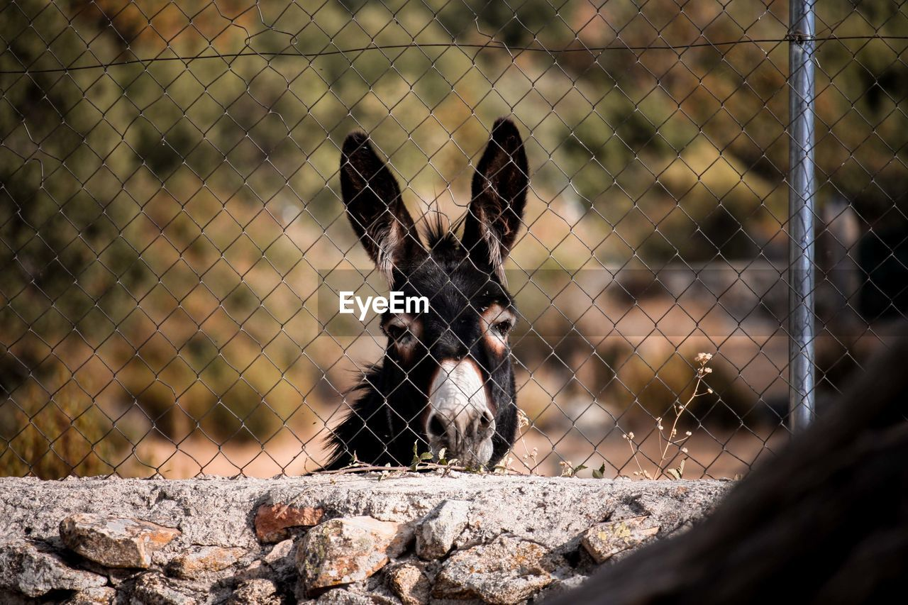 View of an animal seen through chainlink fence