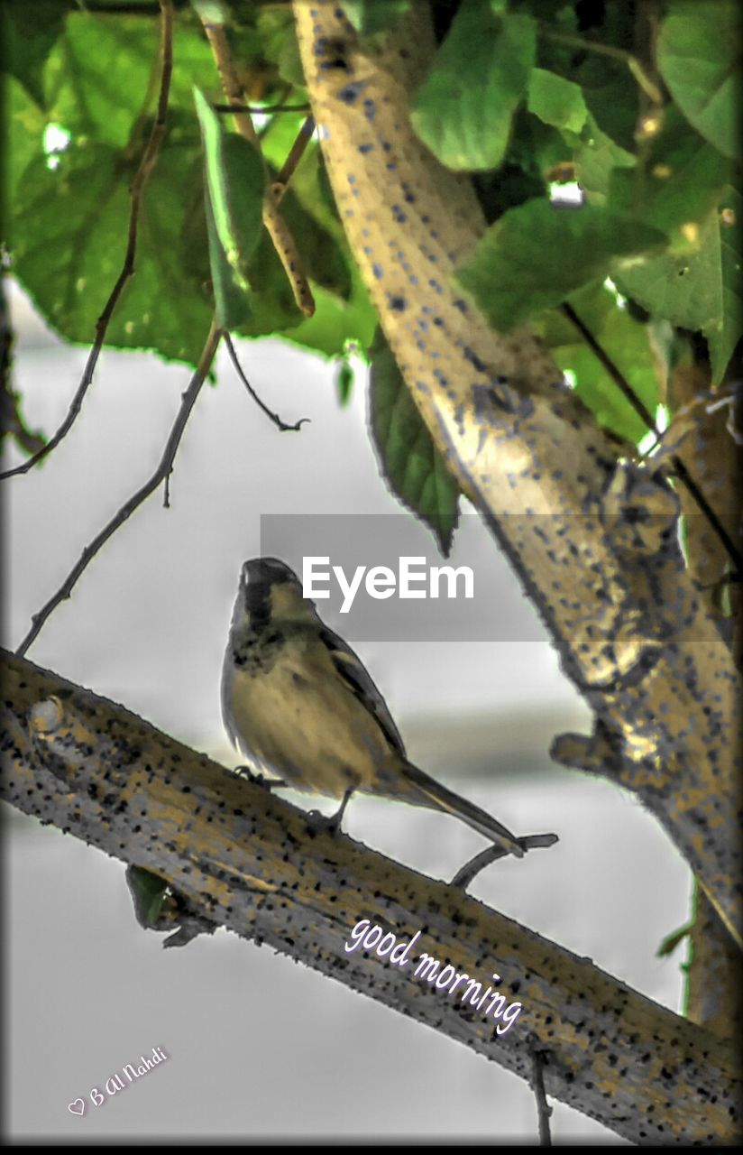 animals in the wild, one animal, perching, focus on foreground, animal wildlife, branch, animal themes, tree, bird, no people, close-up, day, outdoors, nature, leaf, low angle view, beauty in nature