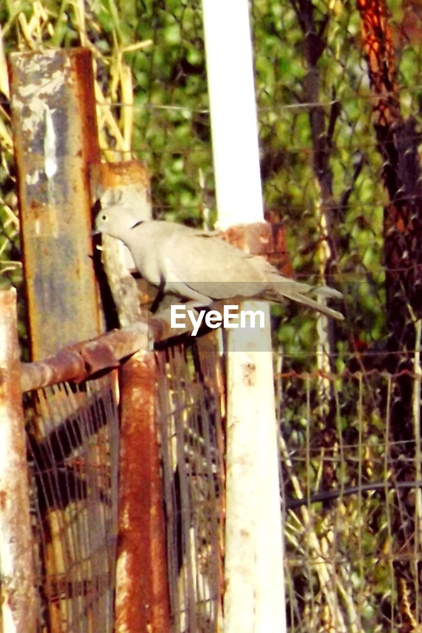 animal themes, bird, animals in the wild, one animal, no people, animal wildlife, perching, day, outdoors, nature, close-up