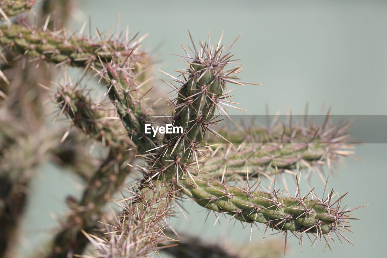 growth, plant, close-up, succulent plant, green color, no people, sharp, cactus, thorn, nature, beauty in nature, selective focus, day, spiked, focus on foreground, outdoors, sign, warning sign, communication, natural pattern, spiky, needle - plant part, climate, arid climate, coniferous tree