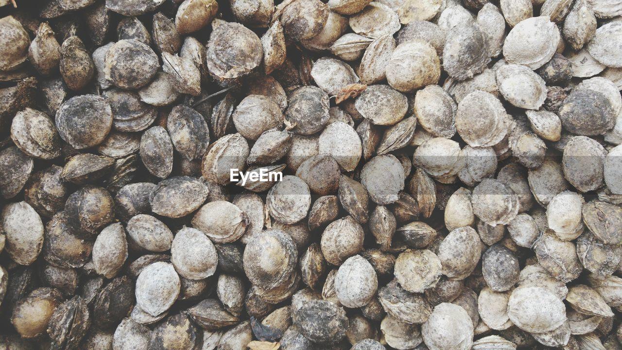 Full Frame Shot Of Apricot Seeds