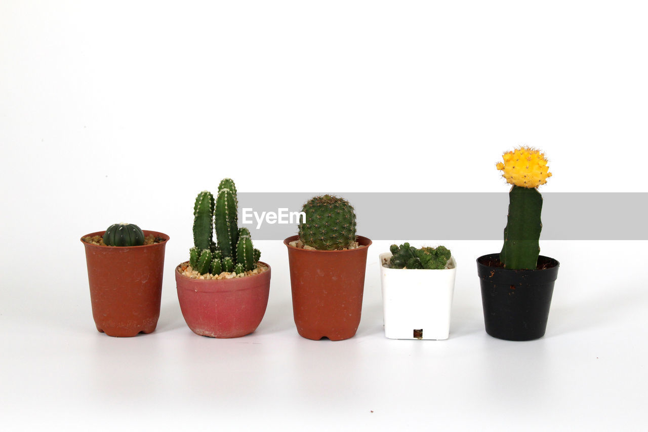 white background, studio shot, indoors, plant, side by side, freshness, no people, still life, copy space, group of objects, potted plant, close-up, food and drink, cut out, arrangement, flower, succulent plant, green color, food, nature