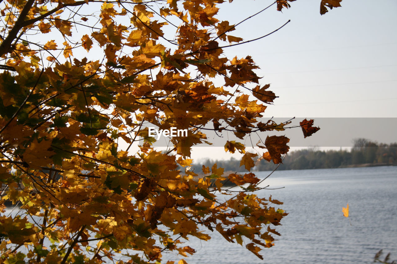 tree, plant, autumn, beauty in nature, change, growth, nature, branch, plant part, leaf, day, tranquility, sky, no people, orange color, outdoors, scenics - nature, focus on foreground, flowering plant, low angle view, leaves