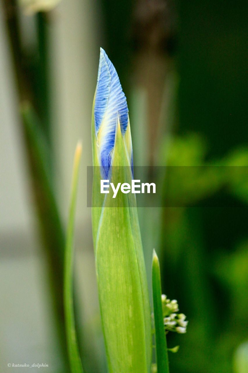 growth, nature, green color, plant, focus on foreground, close-up, beauty in nature, no people, day, flower, outdoors, fragility, freshness, flower head