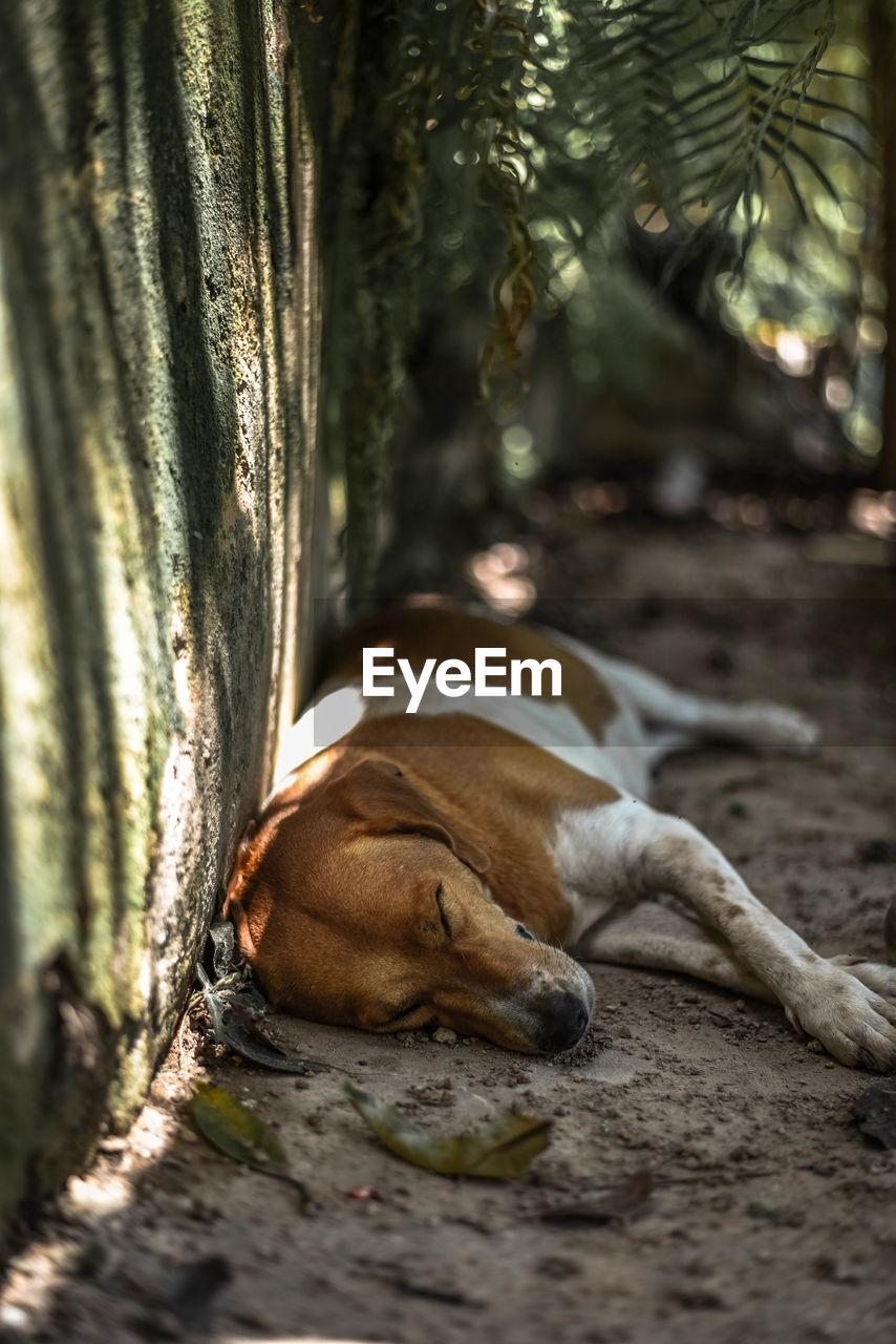 DOG SLEEPING IN A TREE