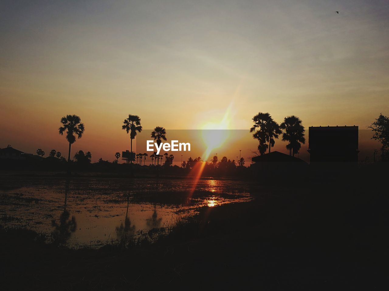 sky, sunset, water, beauty in nature, sun, tree, plant, tranquility, tranquil scene, scenics - nature, reflection, silhouette, sunlight, nature, sunbeam, orange color, no people, palm tree, lens flare, outdoors
