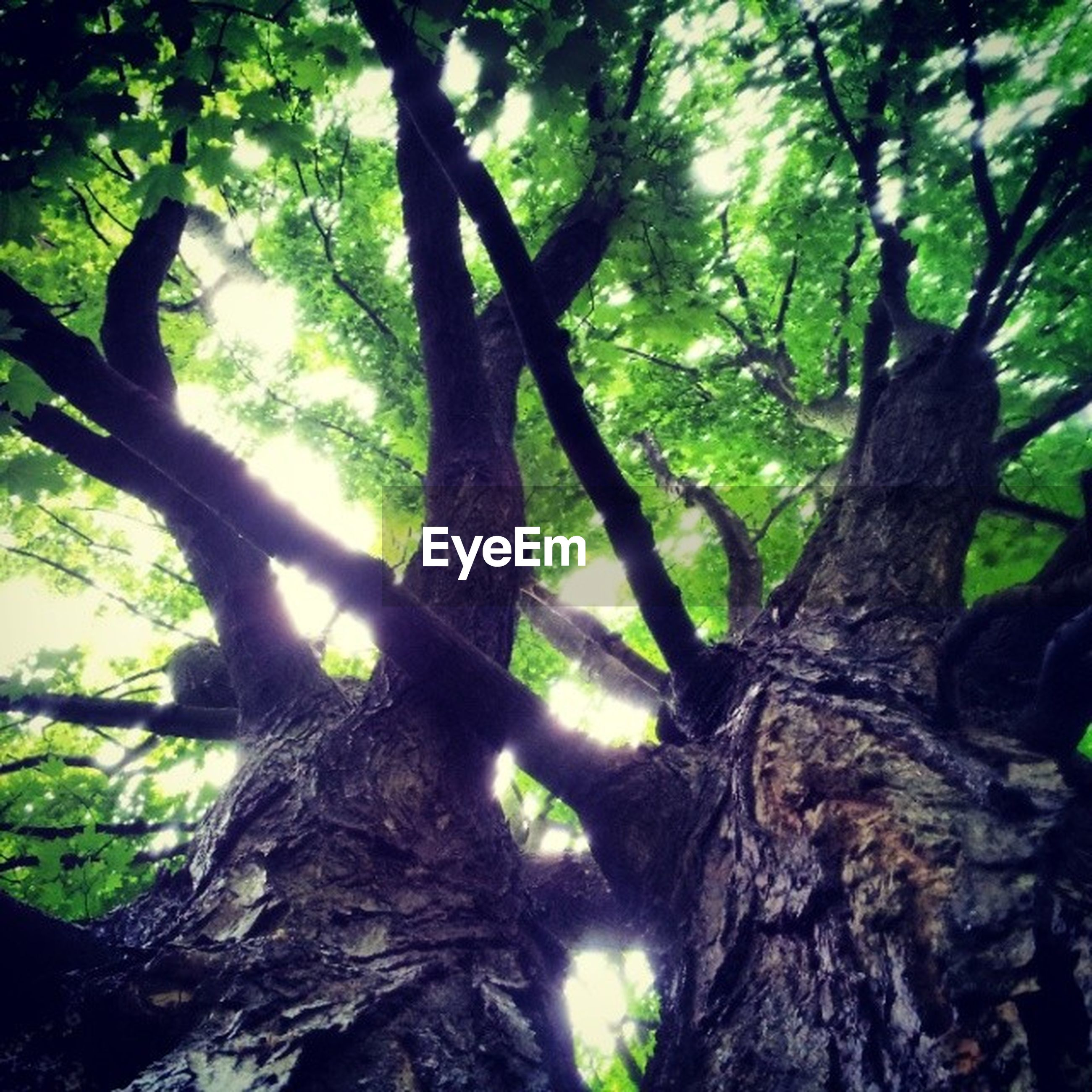 tree, tree trunk, growth, low angle view, branch, forest, nature, tranquility, bark, textured, green color, beauty in nature, close-up, day, outdoors, woodland, no people, moss, rough, focus on foreground