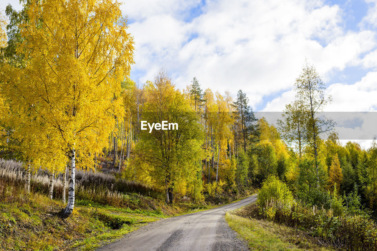 tree, plant, autumn, road, beauty in nature, change, transportation, the way forward, direction, nature, sky, tranquility, no people, scenics - nature, tranquil scene, day, non-urban scene, cloud - sky, land, growth, outdoors, diminishing perspective, autumn collection