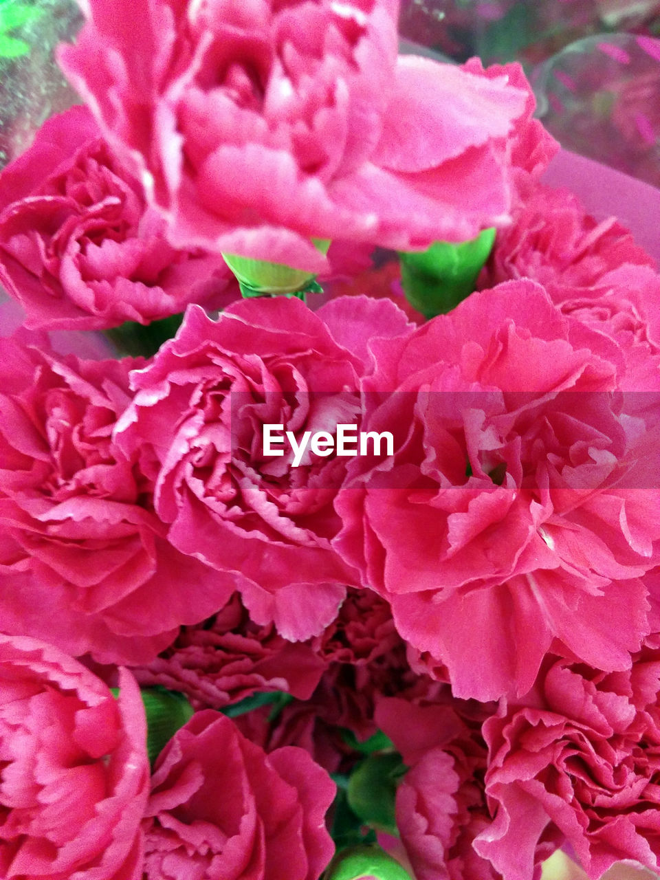 flower, pink color, petal, no people, nature, flower head, fragility, beauty in nature, plant, freshness, rose - flower, outdoors, close-up, day, full frame, backgrounds, peony