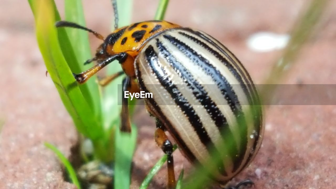 animals in the wild, animal themes, insect, one animal, close-up, animal wildlife, no people, day, nature, outdoors, ladybug