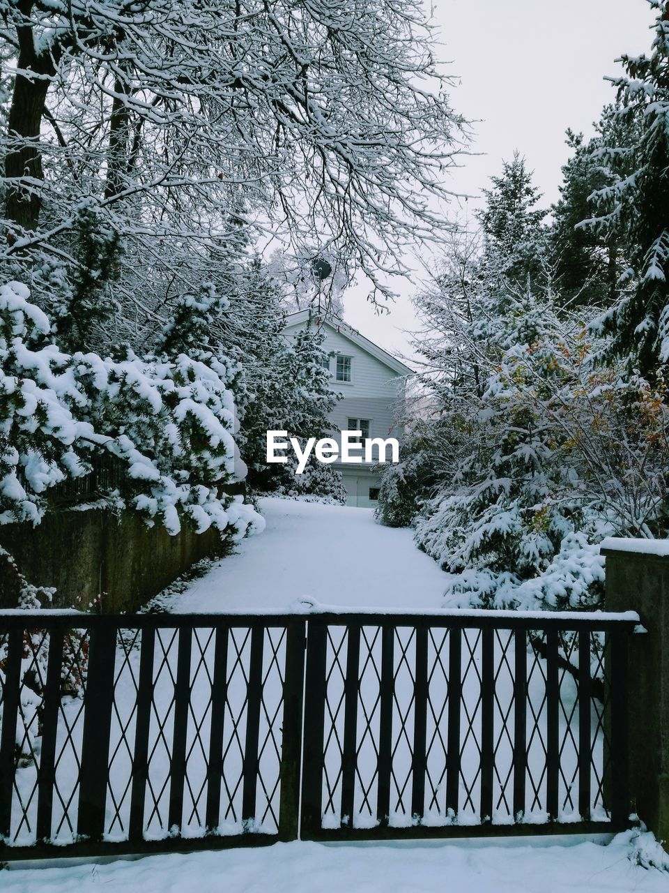 snow, winter, tree, cold temperature, nature, weather, railing, day, outdoors, built structure, no people, beauty in nature, building exterior, architecture, frozen, water, sky