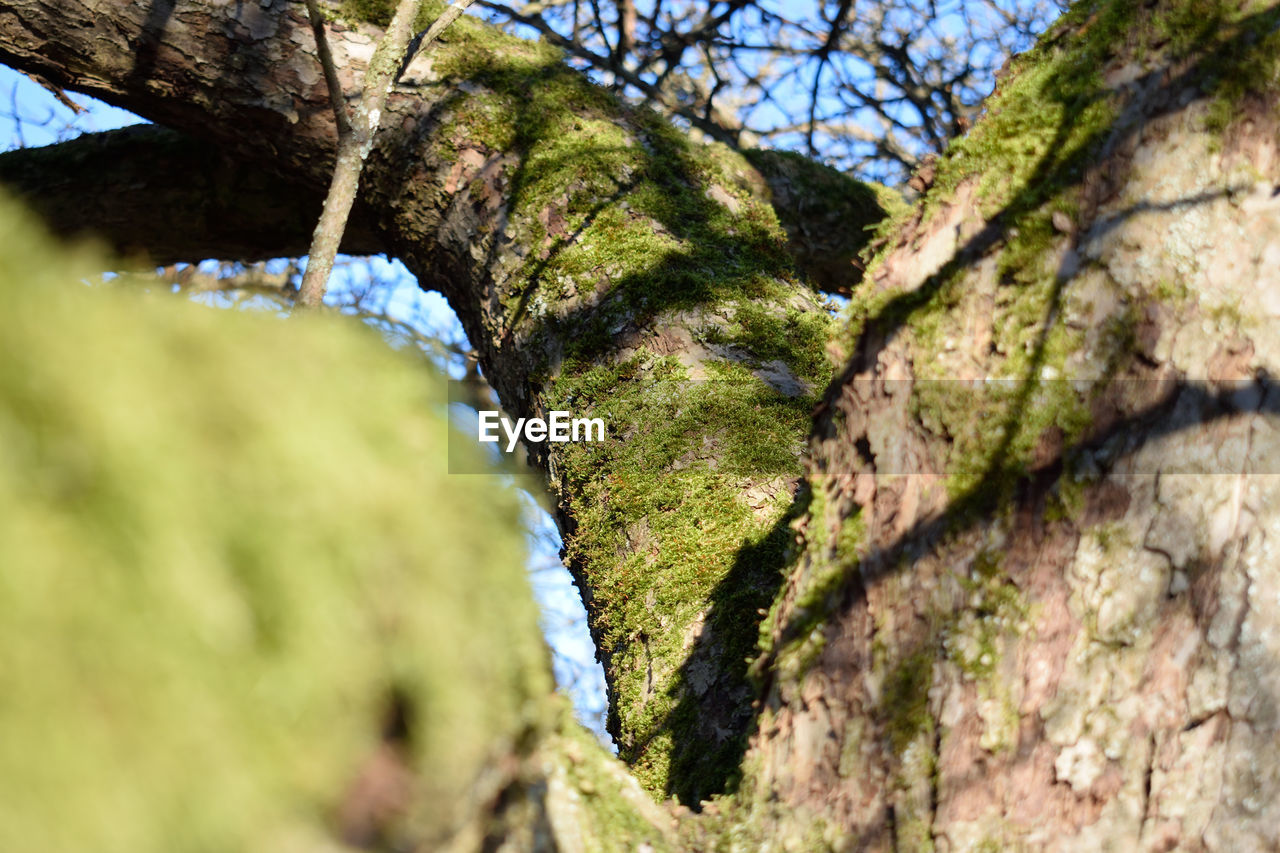 plant, tree, selective focus, no people, day, nature, growth, close-up, moss, outdoors, green color, textured, beauty in nature, tree trunk, trunk, low angle view, sunlight, tranquility, rough, focus on foreground, lichen