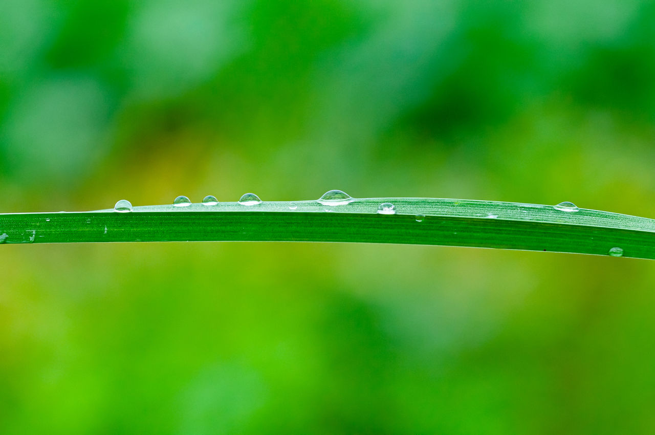 green color, water, close-up, wet, plant, drop, nature, focus on foreground, growth, no people, plant part, day, leaf, blade of grass, beauty in nature, outdoors, grass, freshness, purity, rain, raindrop, dew, rainy season