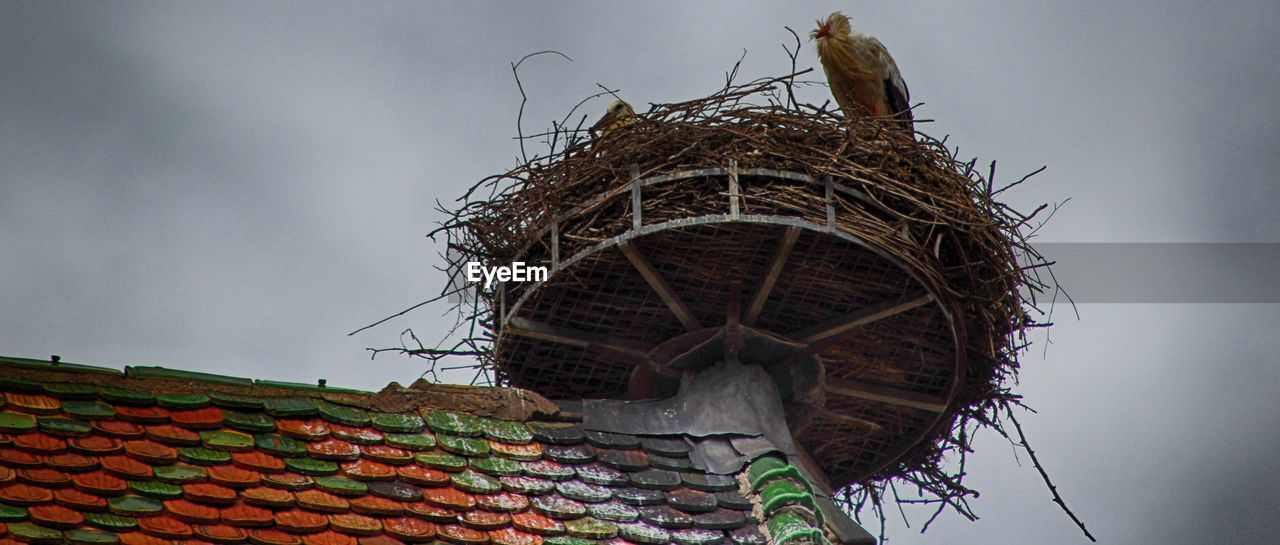 architecture, roof, built structure, building exterior, low angle view, sky, nature, roof tile, day, no people, cloud - sky, bird, outdoors, house, animal nest, animal themes, building, animal, bird nest
