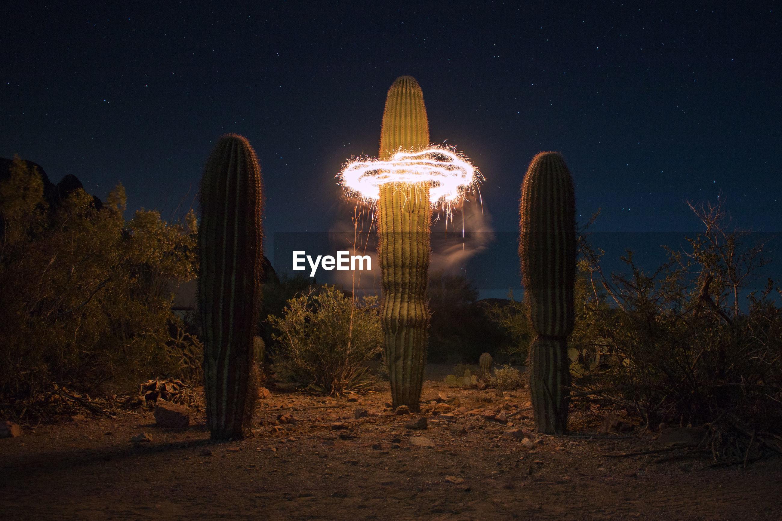 Illuminated circle around cactus