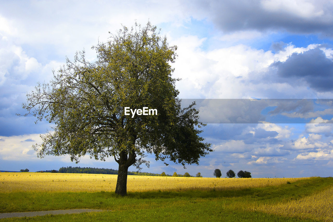 Tree On Grassy Field Against Cloudy Sky
