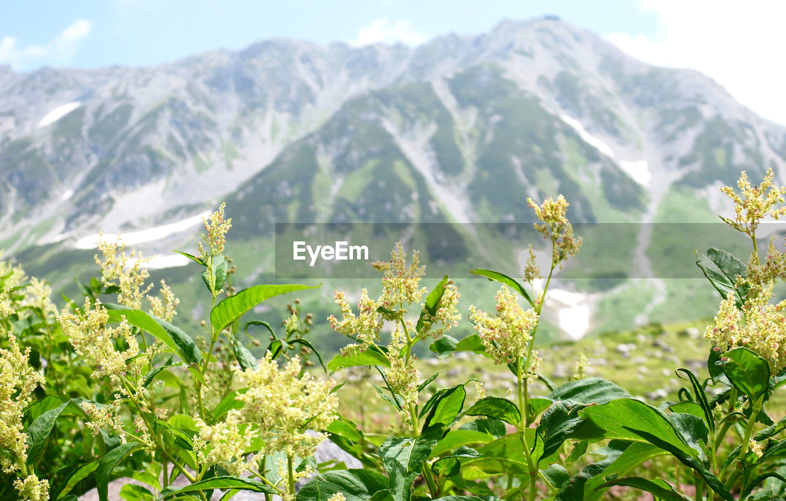 SCENIC VIEW OF MOUNTAINS AGAINST PLANTS