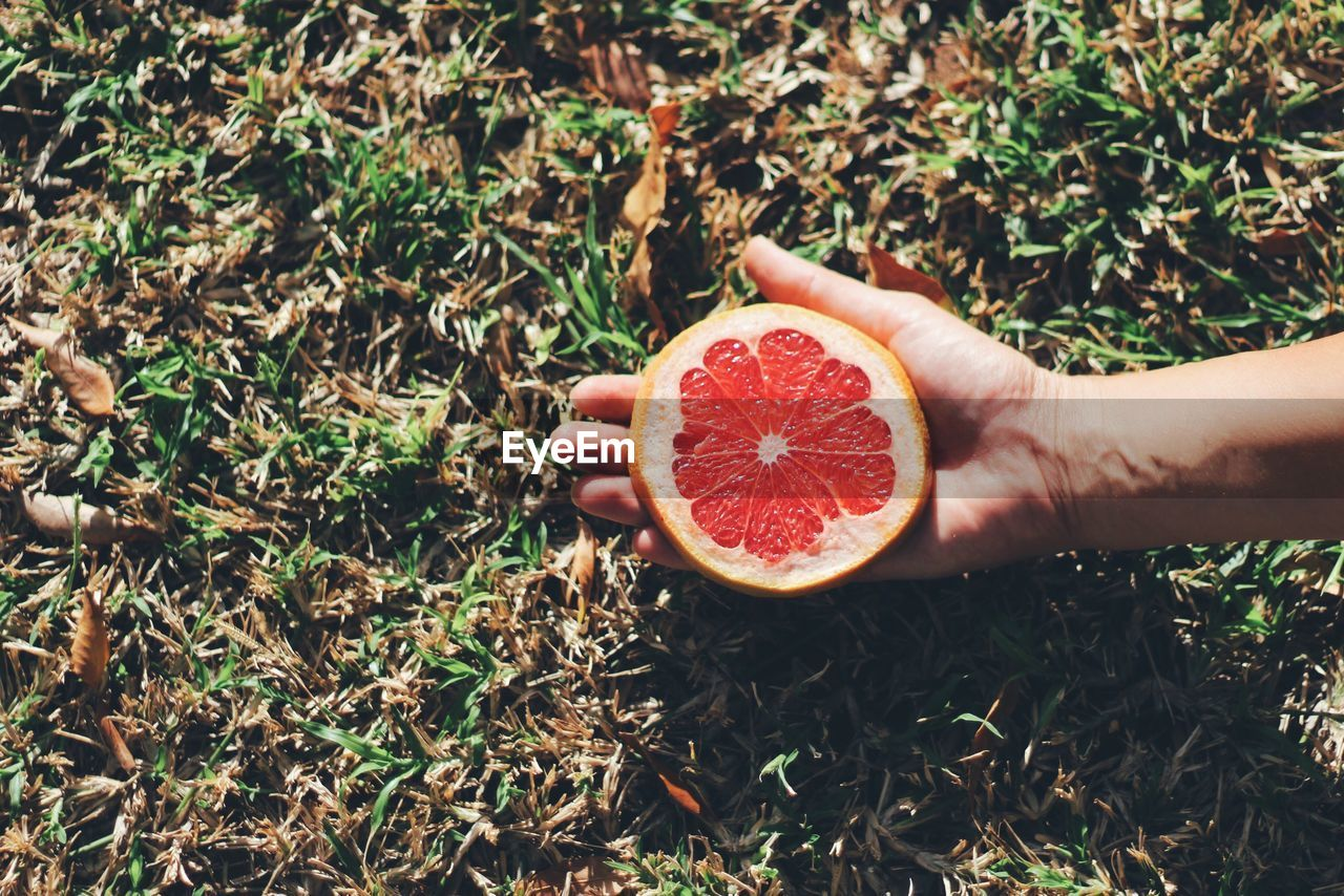 Cropped Image Of Hand Holding Slice Grapefruit On Field