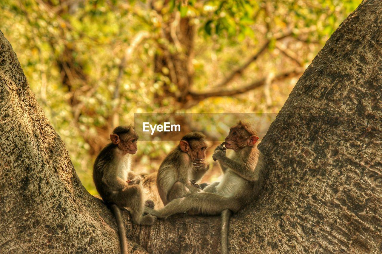 Monkeys Relaxing On Tree