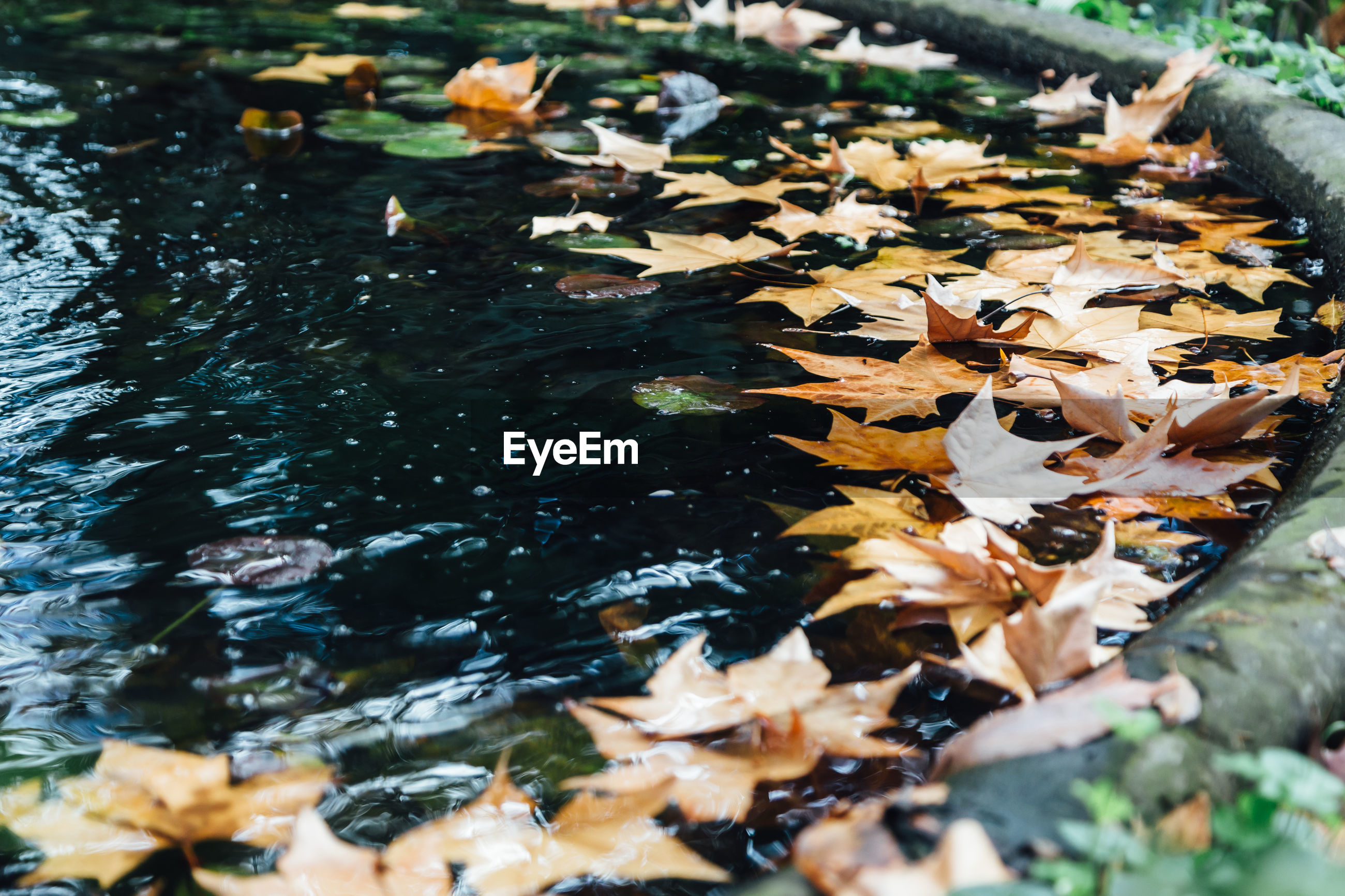 Fallen leaves on ground