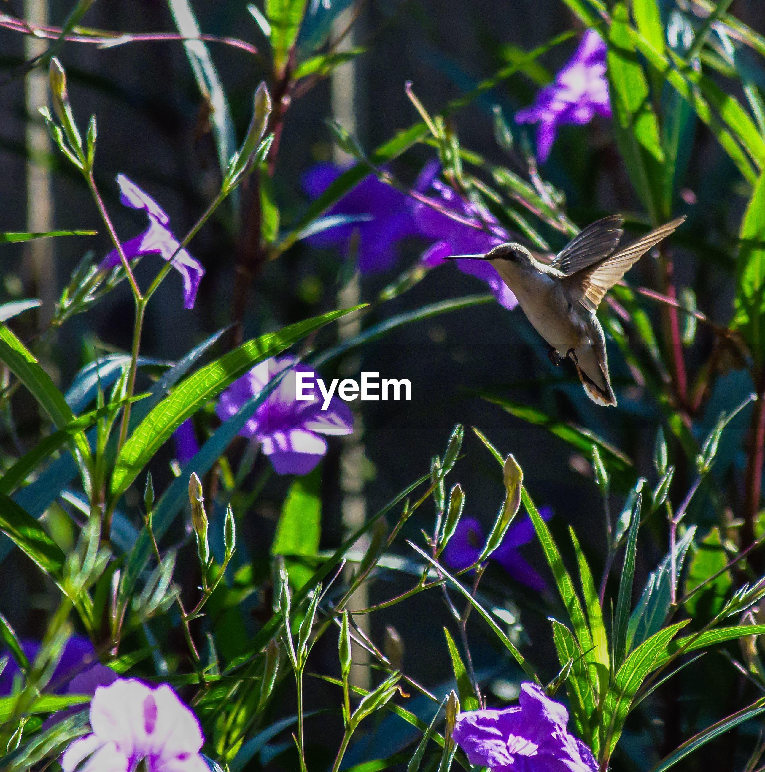 FRESH PURPLE FLOWERING PLANTS GROWING OUTDOORS