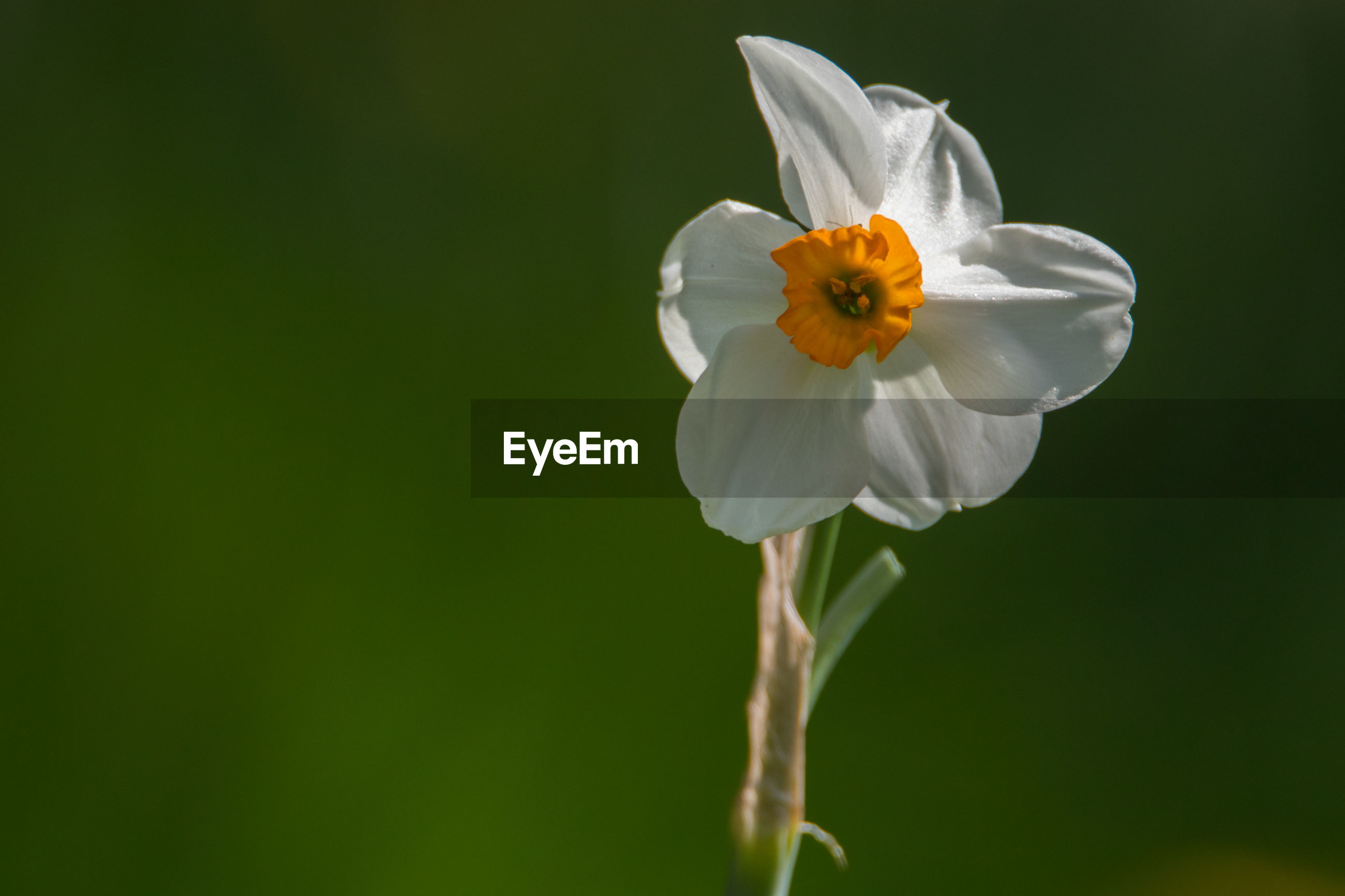 CLOSE-UP OF WHITE FLOWER AGAINST BLURRED BACKGROUND