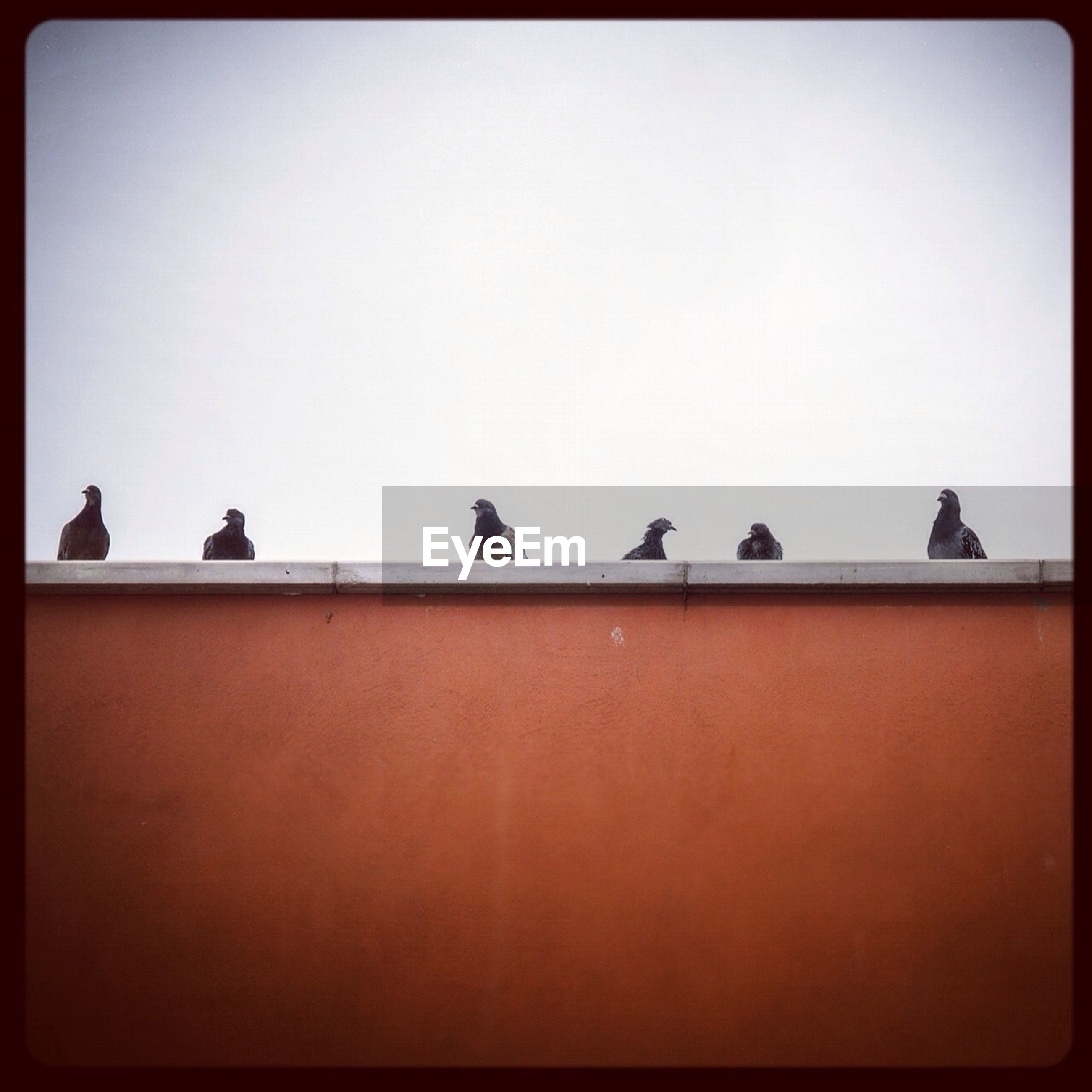 bird, animal themes, clear sky, transfer print, copy space, wildlife, animals in the wild, perching, auto post production filter, silhouette, pigeon, low angle view, medium group of animals, two animals, togetherness, flock of birds, built structure, side by side, outdoors